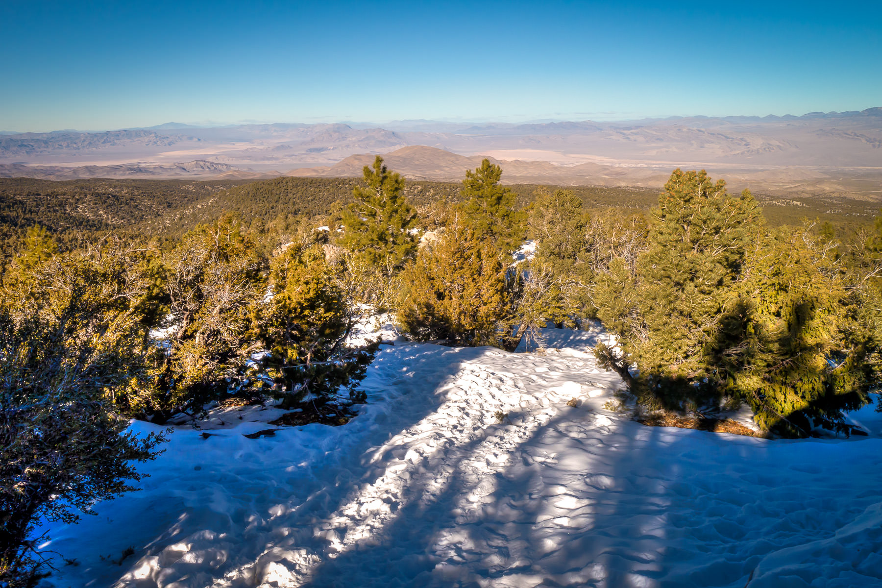 Snow and evergreen trees atop Nevada's Mount Charleston overlook the desert far below.