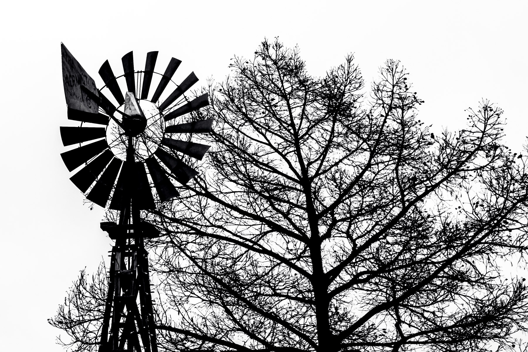 A windmill and a tree are silhouetted by the overcast North Texas sky in Downtown Grapevine.