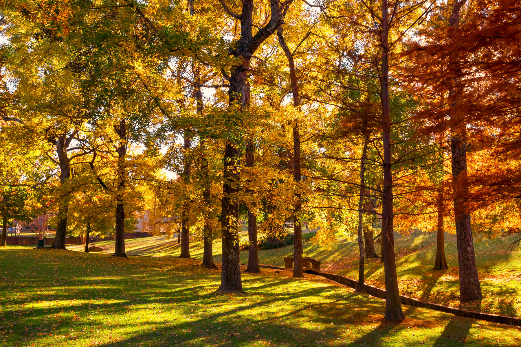 Golden light illuminates the yellows and reds of trees in Tyler, Texas' Bergfeld Park.