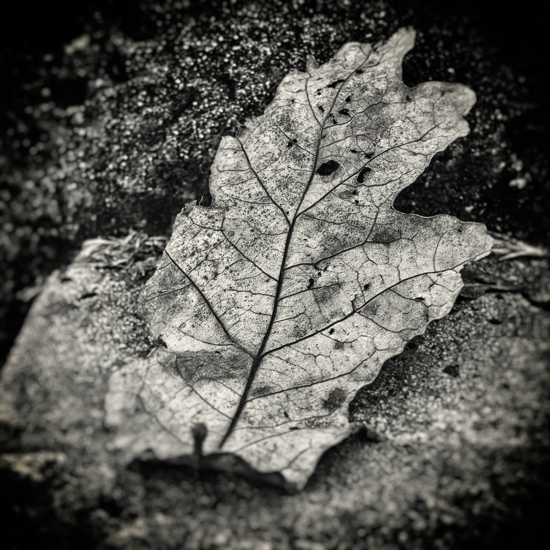 A fallen leaf withers on the steps of a sidewalk at Tyler, Texas' Bergfeld Park.