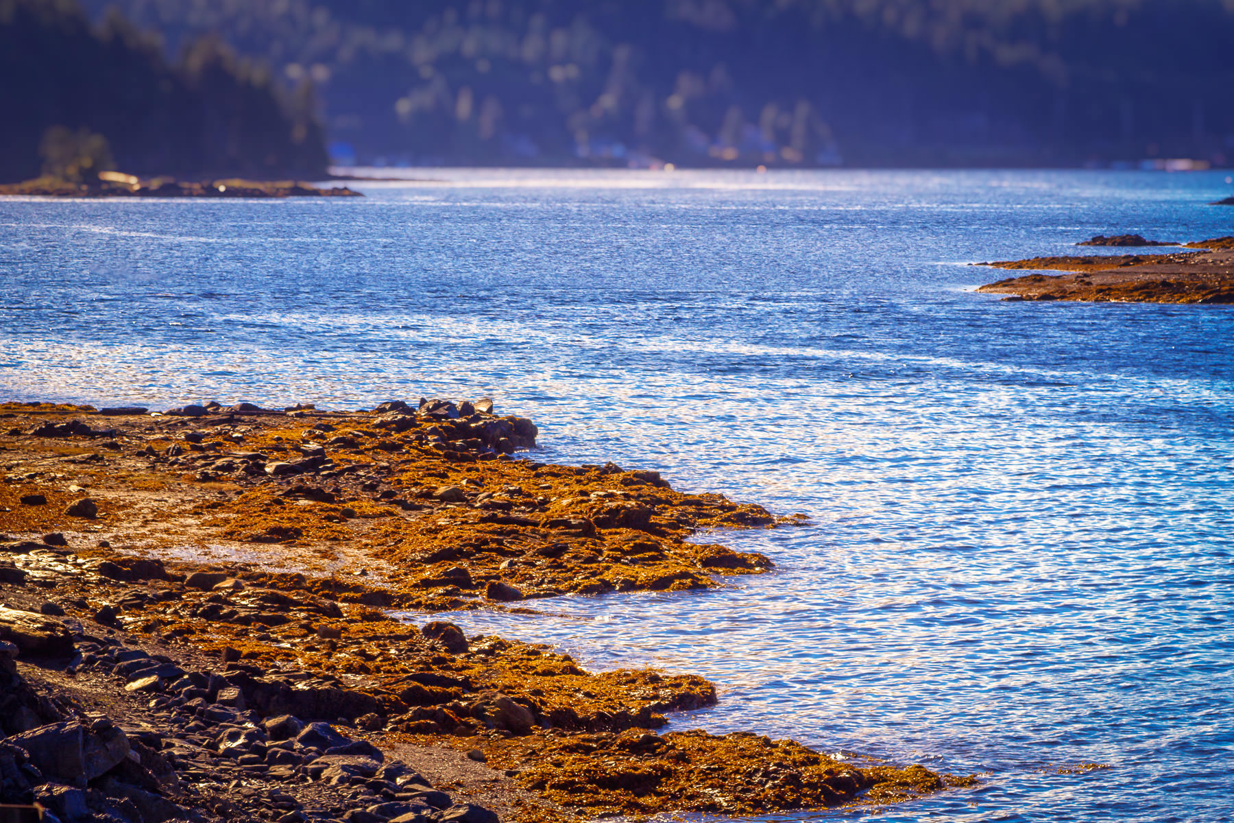 The shore of the Tongass Narrows between Mud Bay and Refuge Cove in Ketchikan, Alaska.