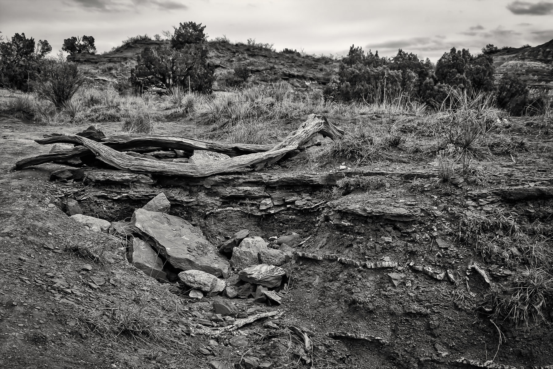A well-weathered log lies on the desert landscape of Texas' Palo Duro Canyon.