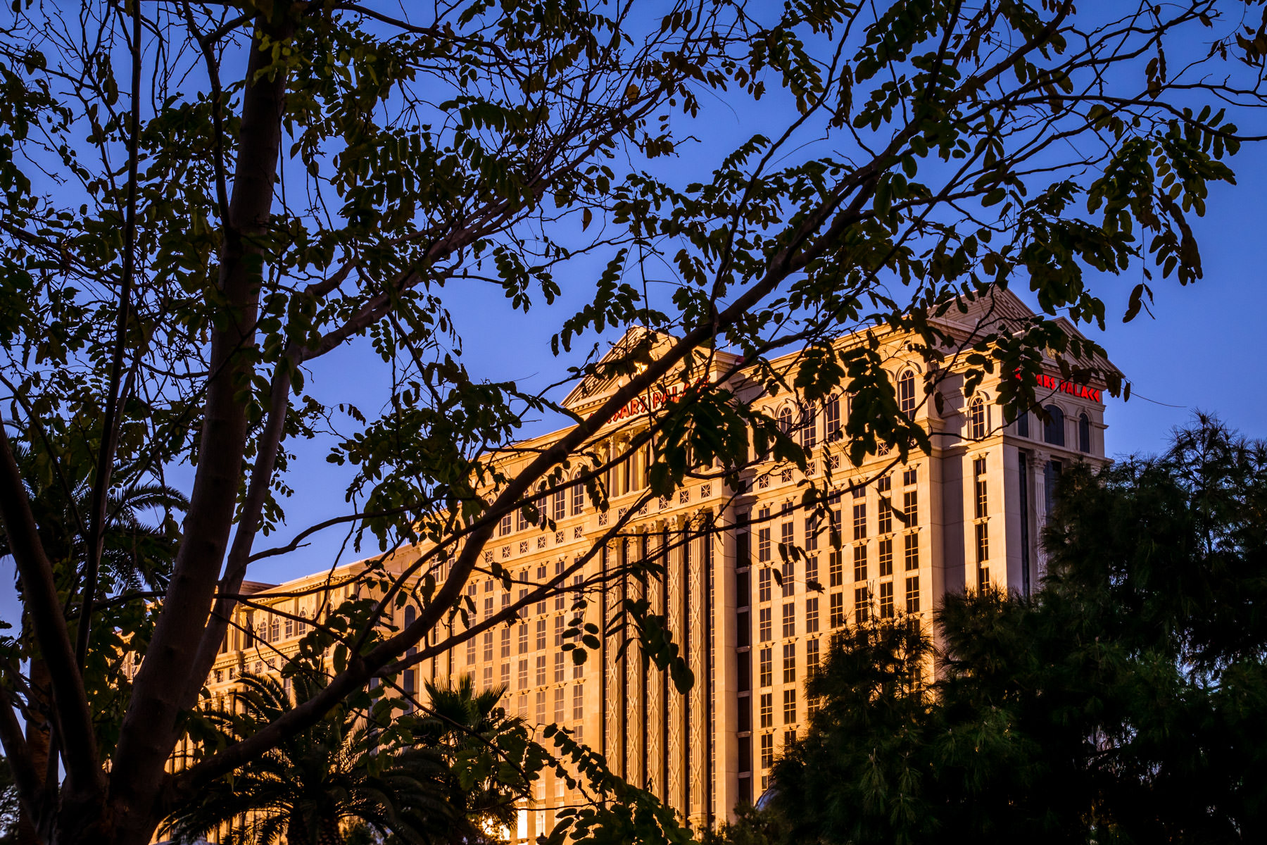 Caesars Palace's Augustus Tower seems to hide behind trees as the sun starts to set on the Las Vegas Strip.