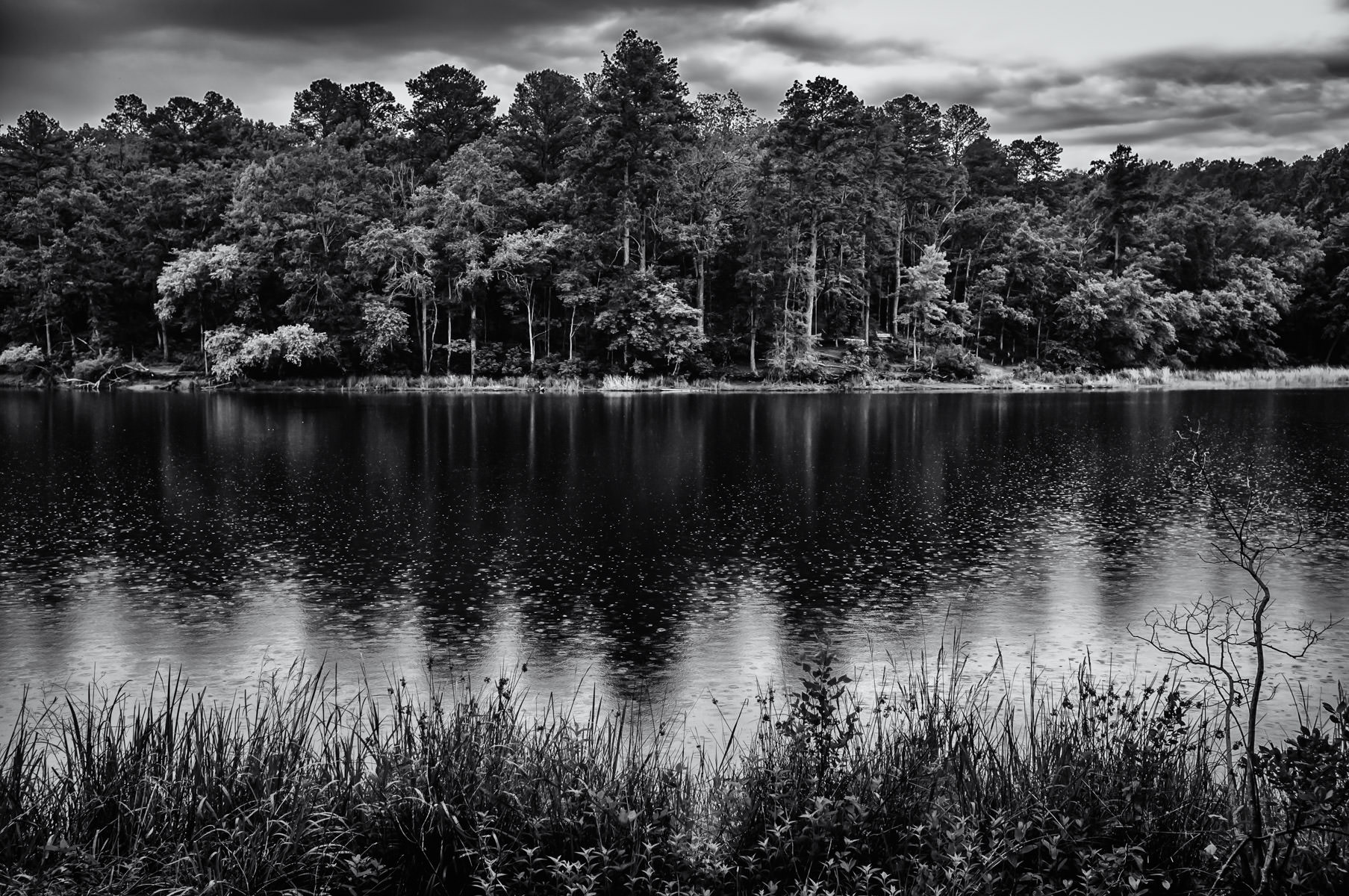 The lake at Tyler State Park, Texas, on a dreary summer day.