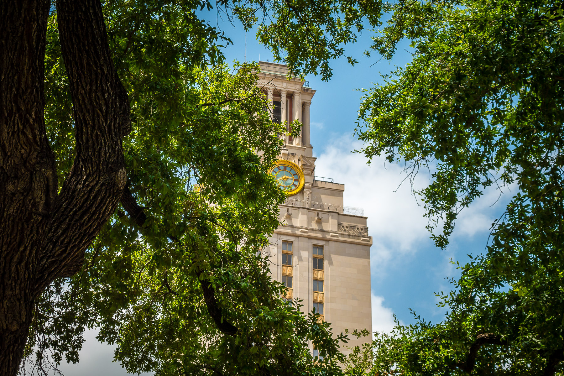The 307-foot-tall Main Building at the University of Texas at Austin appears to hide behind a nearby grove of trees.