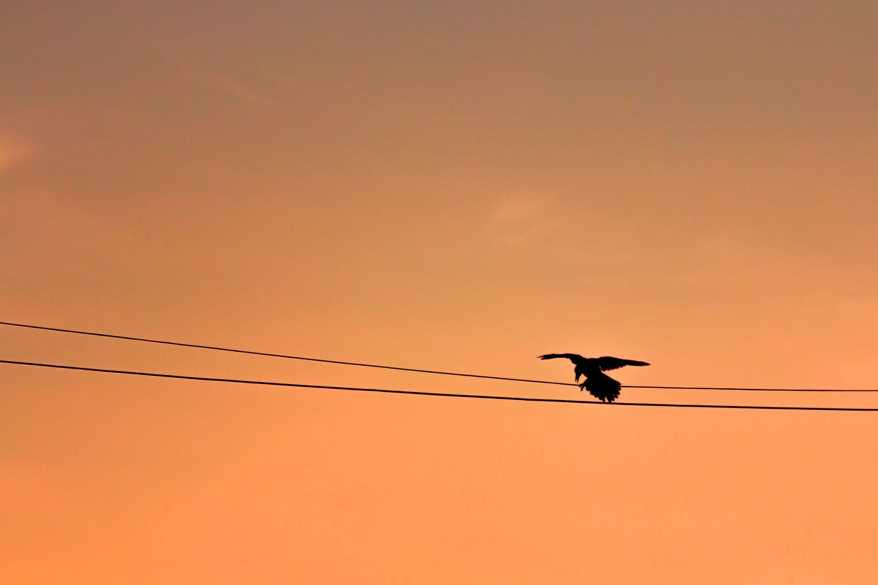 bird power line