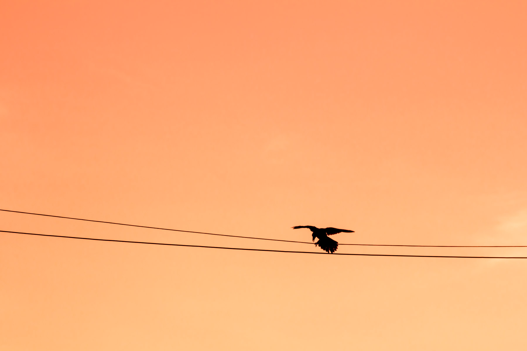 A bird lands on a power line as the sun sets over Dallas' West End district.