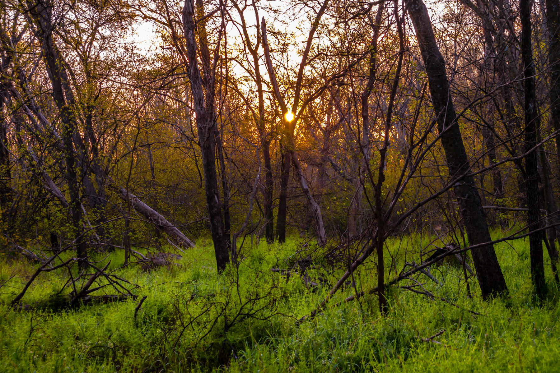 The sunrise illuminates the Great Trinity Forest in South Dallas.
