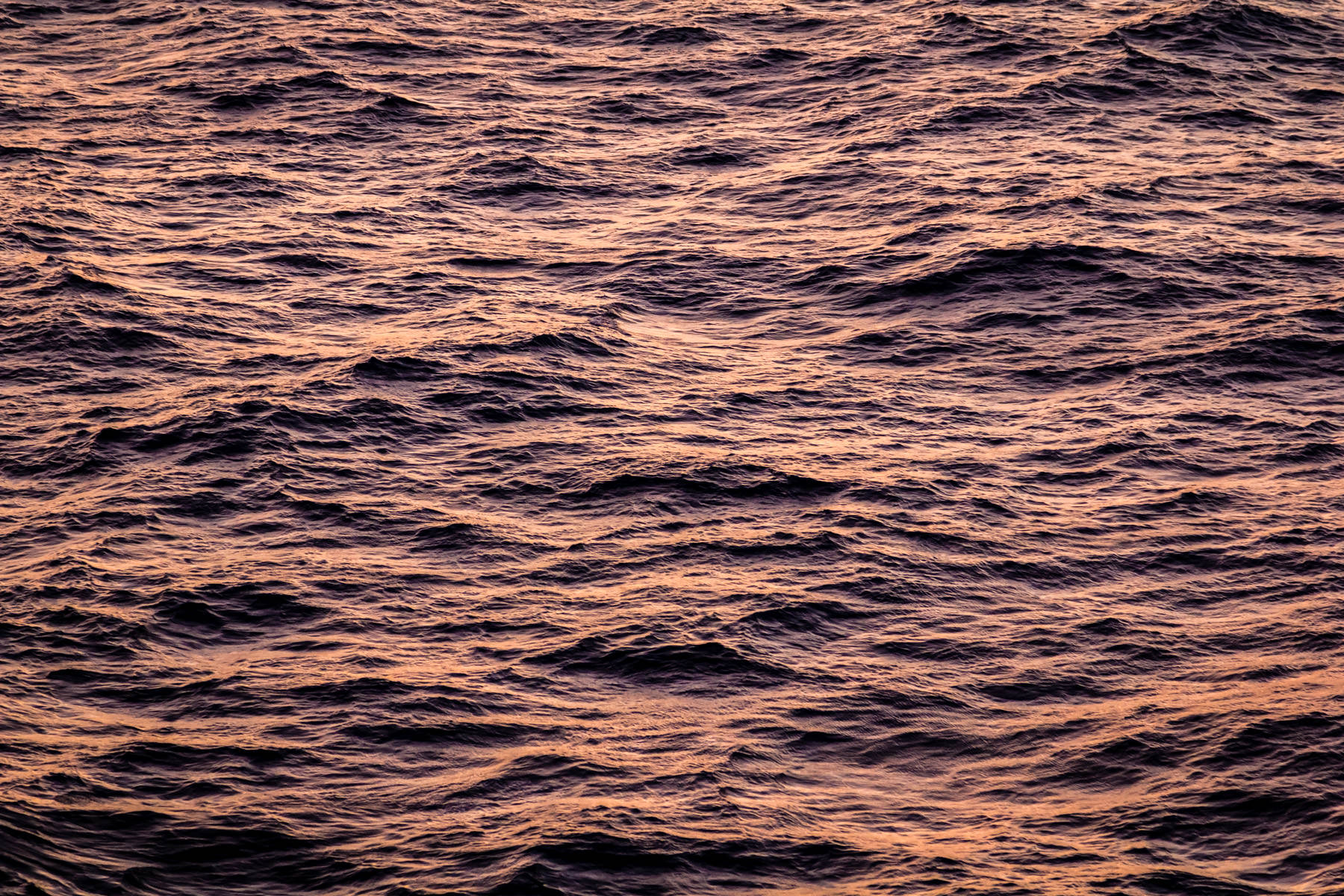 The Gulf of Mexico catches the early morning sunlight, highlighting its ever-changing surface as seen from the deck of the cruise ship Carnival Magic.