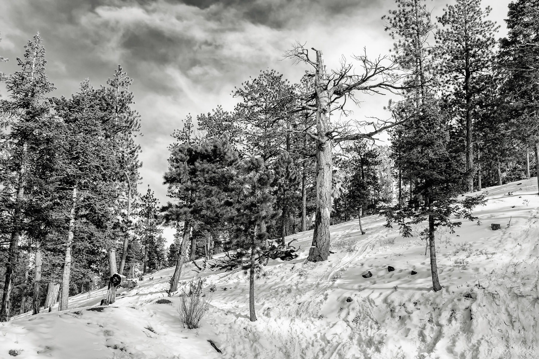 Trees line the snow-covered foothills of Nevada's Mount Charleston.