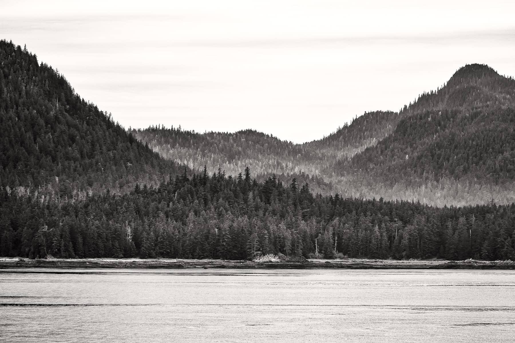 trees alaska shoreline