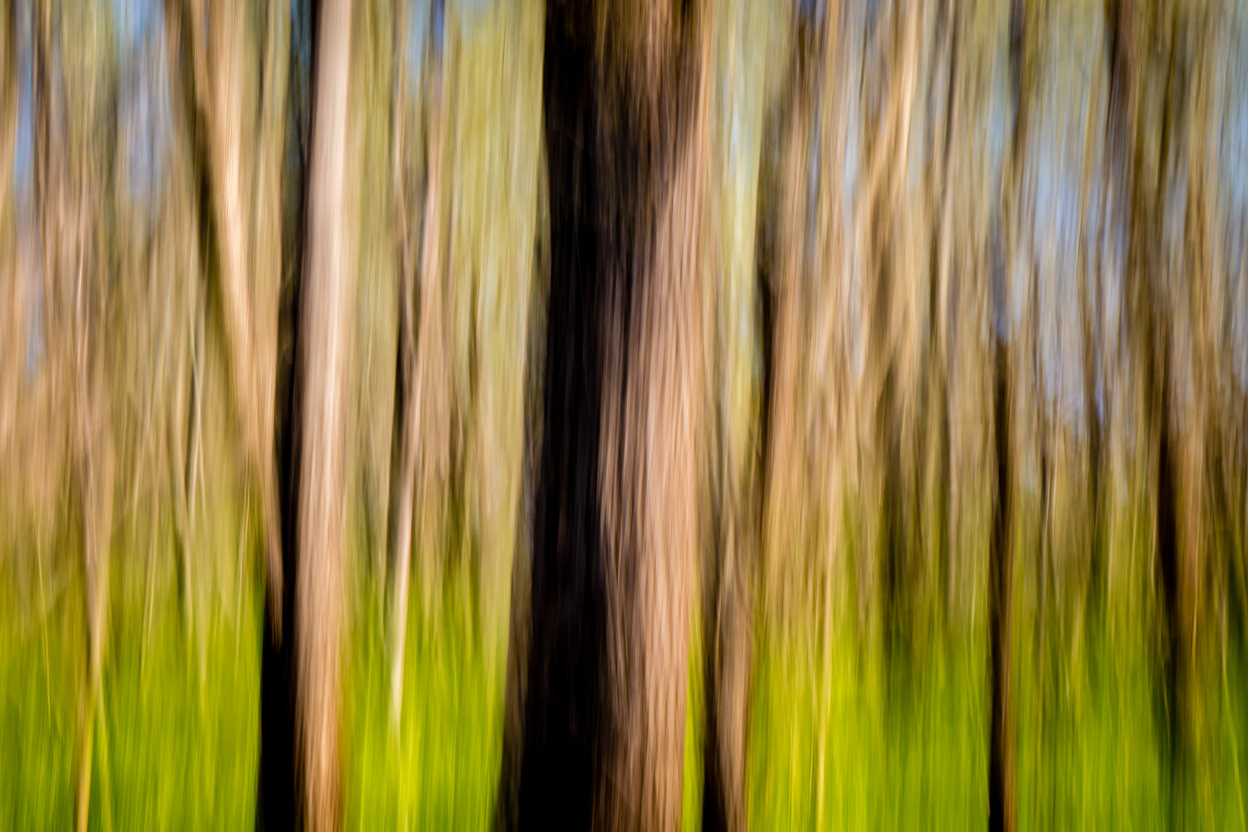 An abstraction of trees in Dallas' Great Trinity Forest.