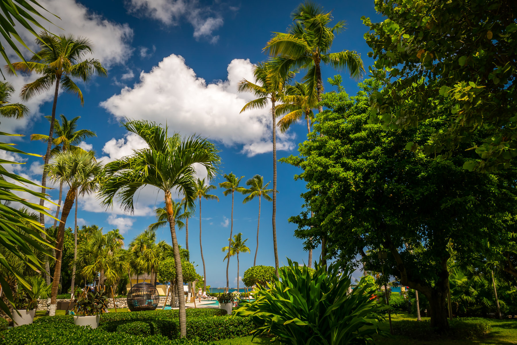 Palm trees tower over the grounds of the historic British Colonial Hilton in Nassau, Bahamas.