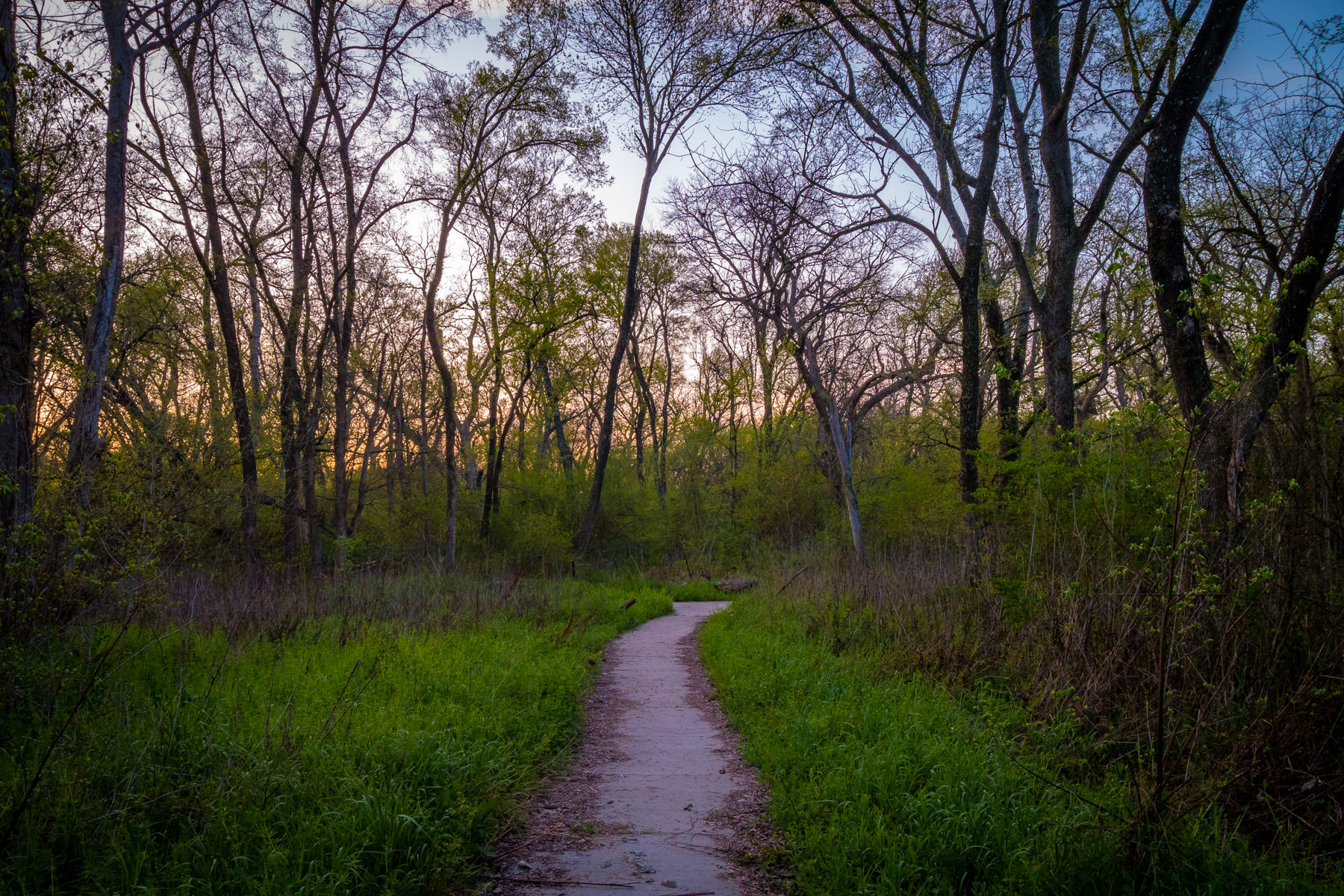 A path leads into the Great Trinity Forest as the sun rises over South Dallas.