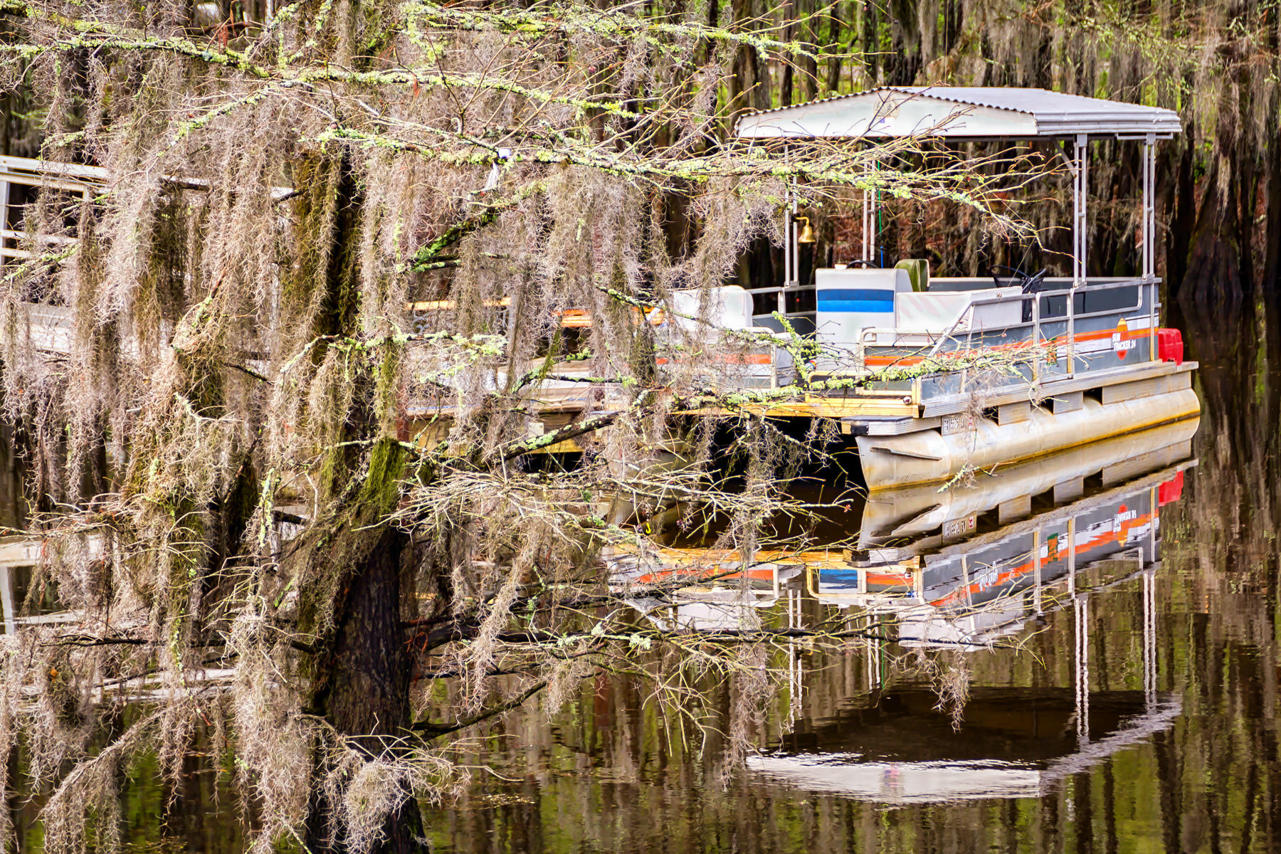 A pontoon boat floats amongst the Spanish moss-covered cypress trees of Texas' Caddo Lake.