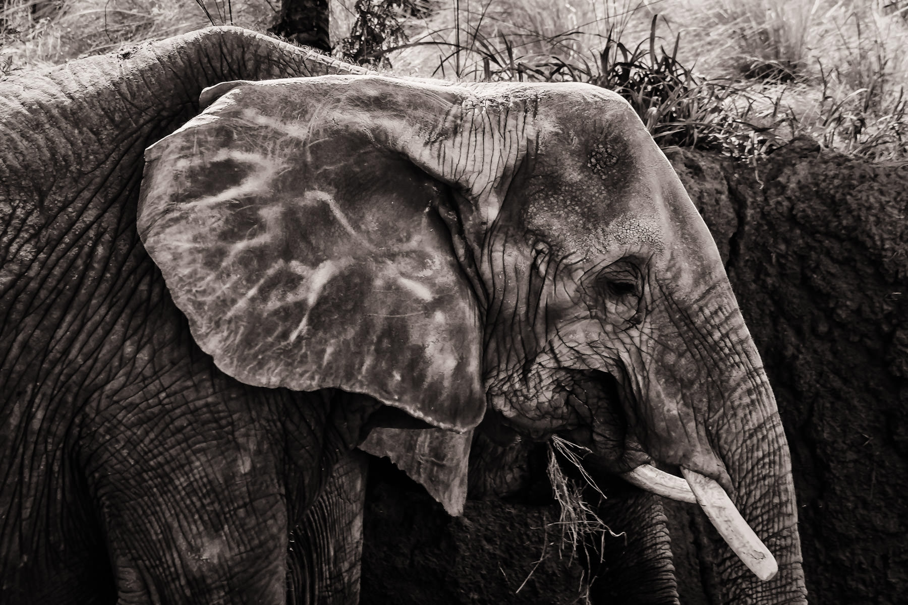 An elephant rests in his habitat at the Dallas Zoo.