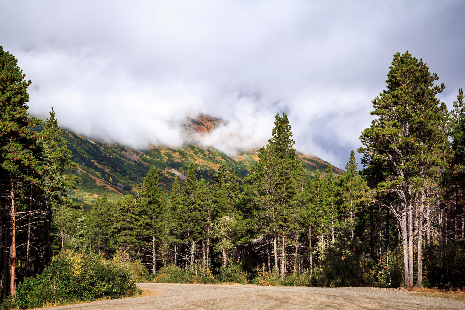 Evergreen trees grow along a gravel road at the base of a cloud-wrapped mountain along the shore of British Columbia's Tutshi Lake.