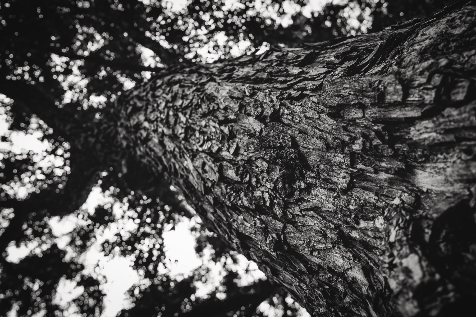 Detail of a tree's trunk, spotted in Austin, Texas' Zilker Park.