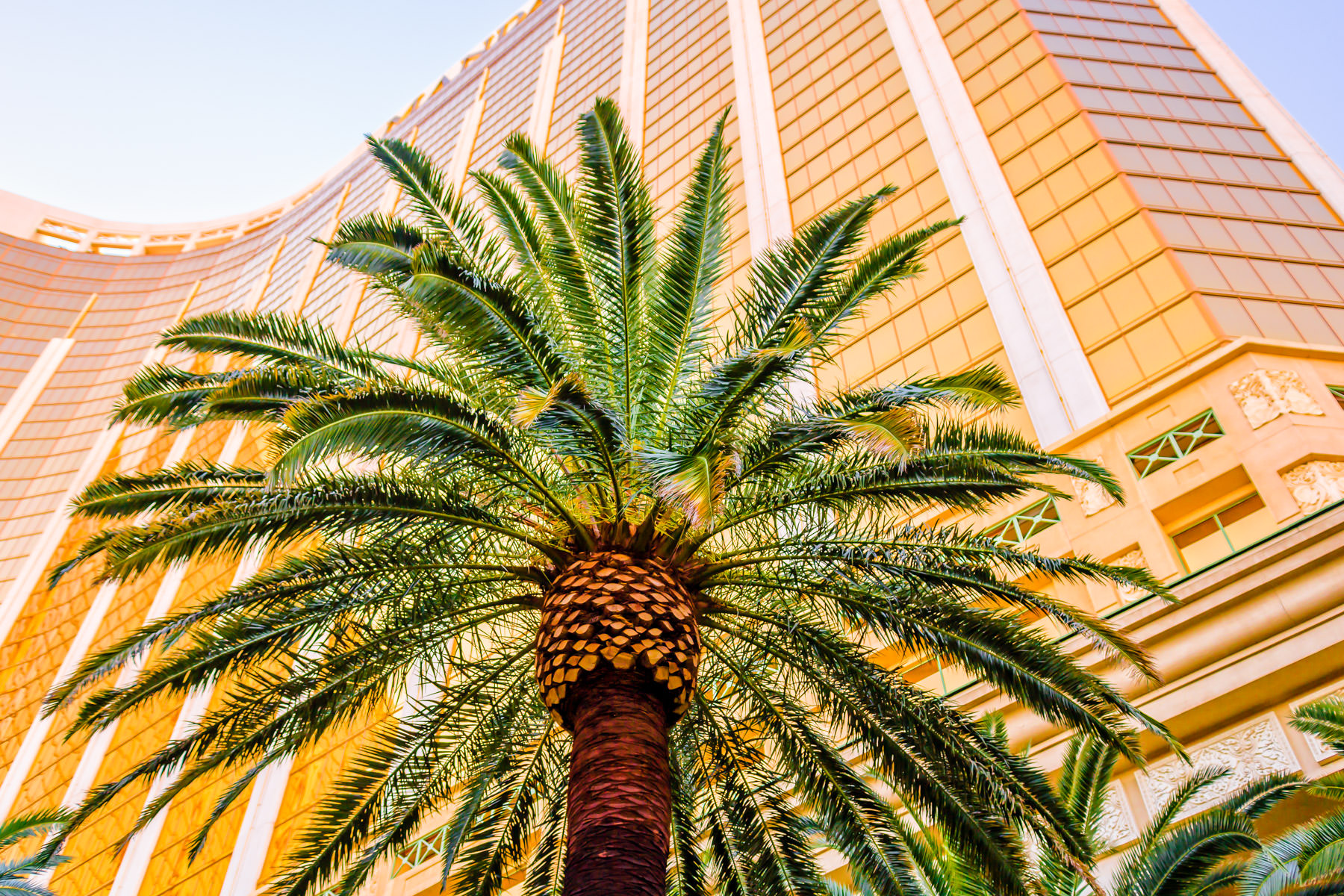 A palm tree is dwarfed by Las Vegas' 43-story-tall Mandalay Bay Resort and Casino.