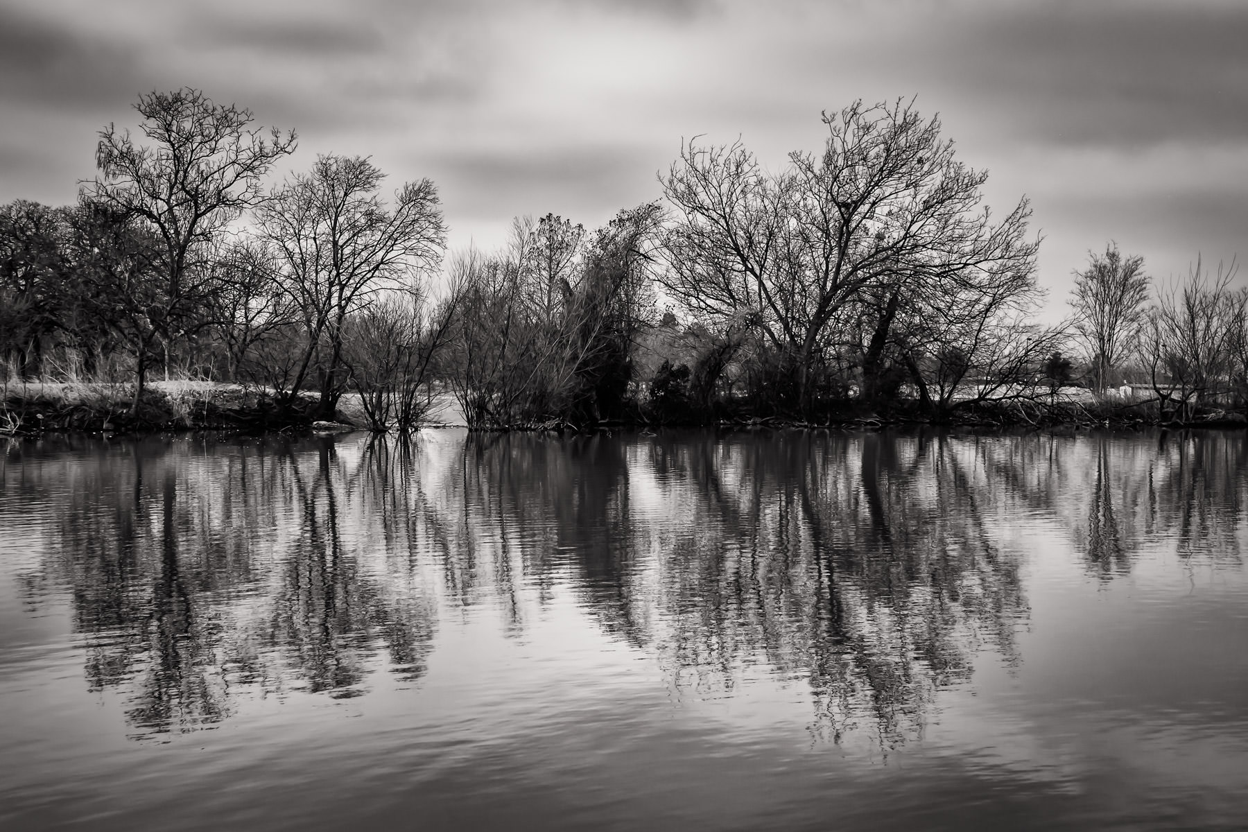 Trees grow along the shore of a small pond on the campus of the University of North Texas in Denton.