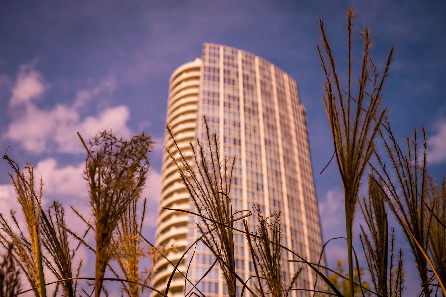 Tall grass grows in Klyde Warren Park near the Dallas Arts District's Museum Tower.