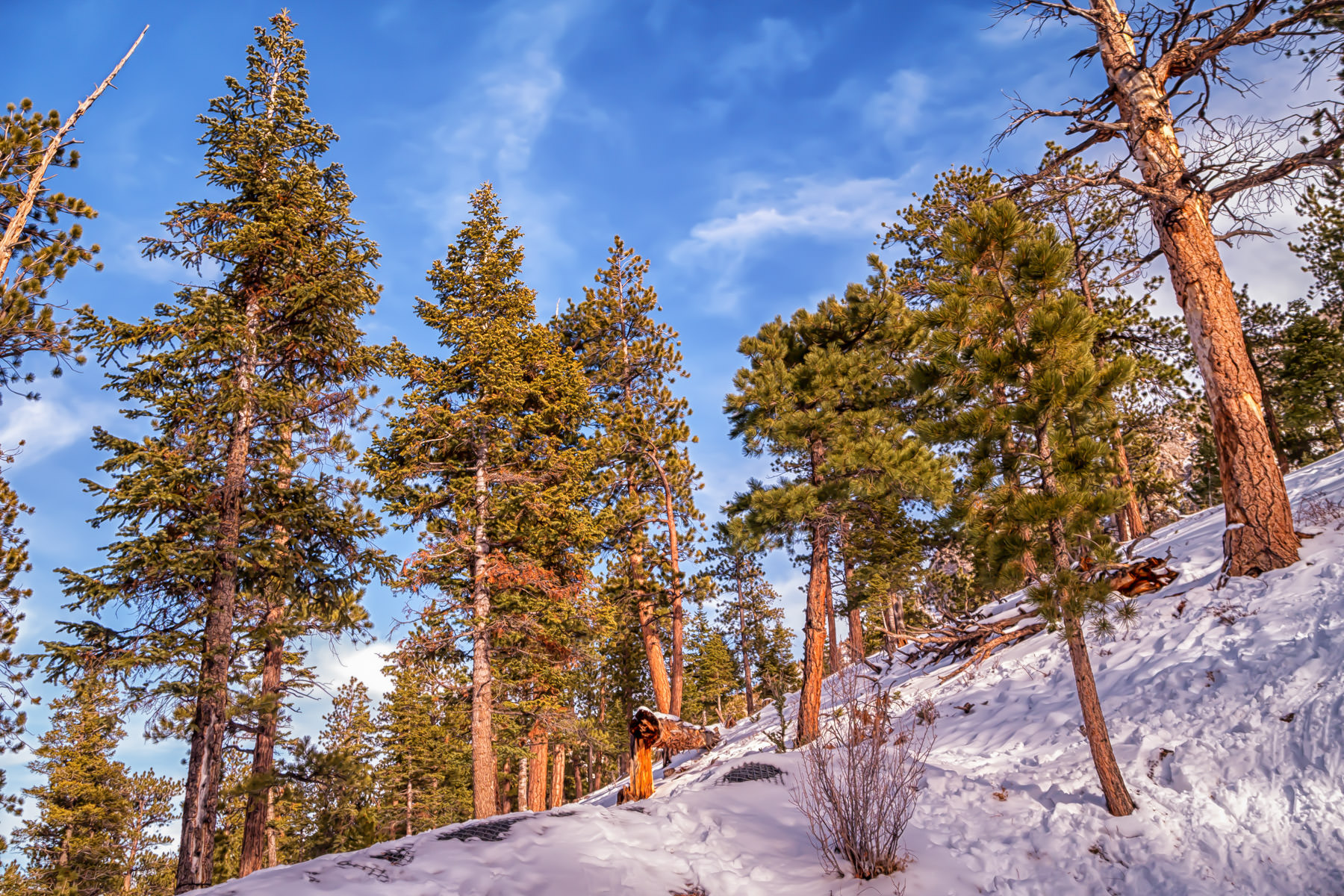 Winter snows cover the ground in the foothills of Nevada's Mount Charleston.