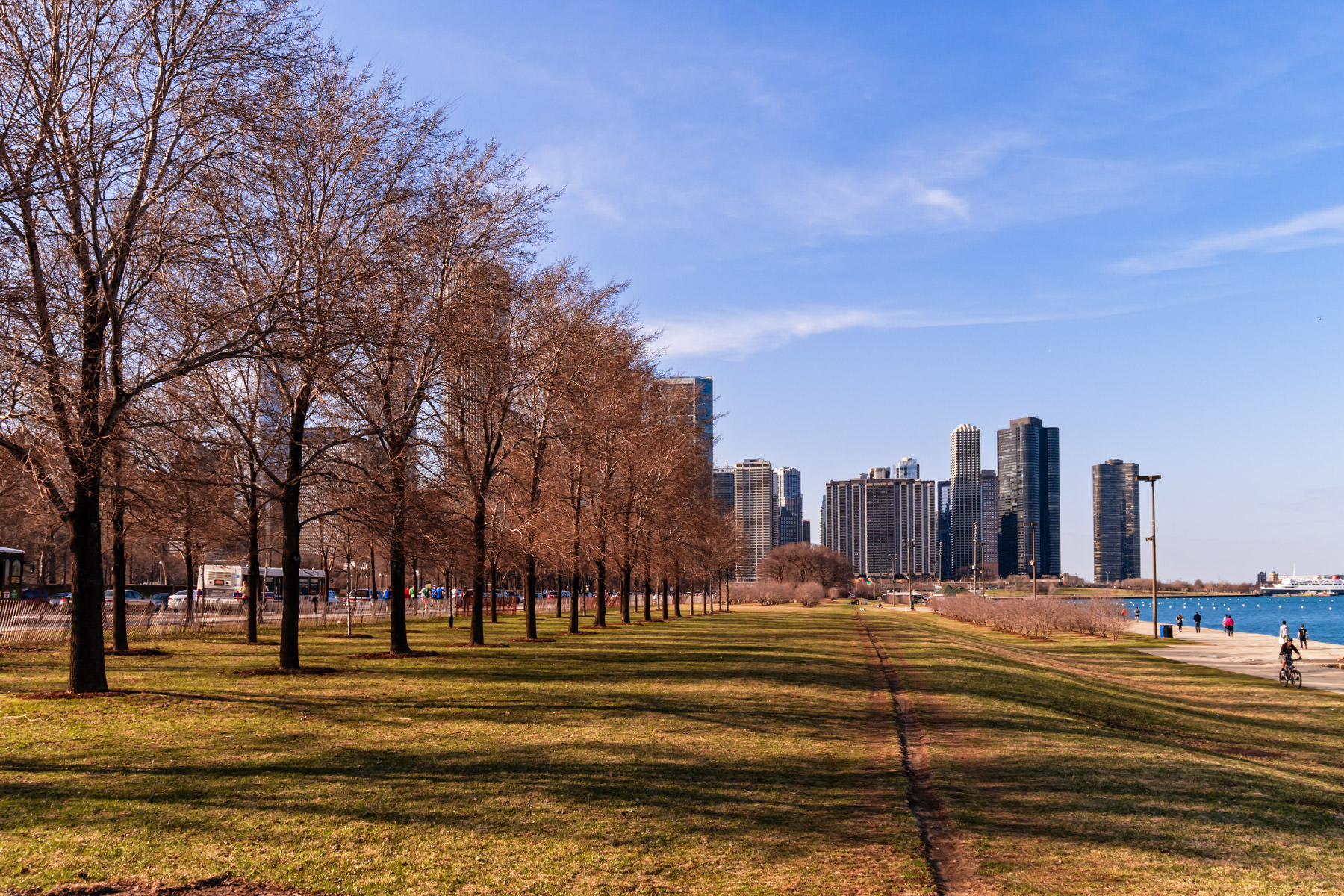 A row of trees stretches along the Lake Michigan shore in Chicago's Grant Park.