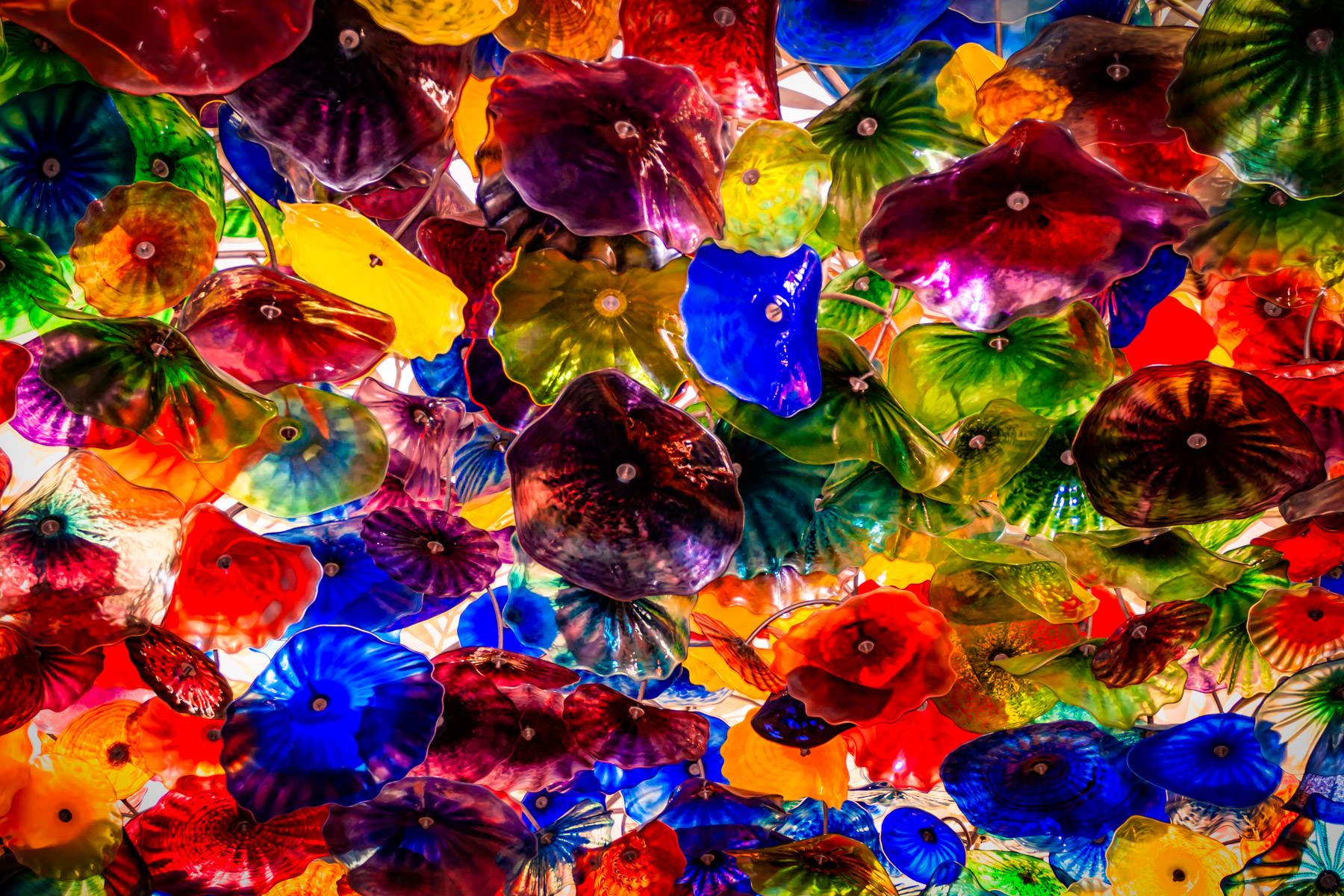 Glass artist Dale Chihuly's Fiori di Como, composed of over 2,000 hand-blown glass flowers, covers 2,000 square feet of the lobby ceiling inside Las Vegas' Bellagio Hotel and Casino.