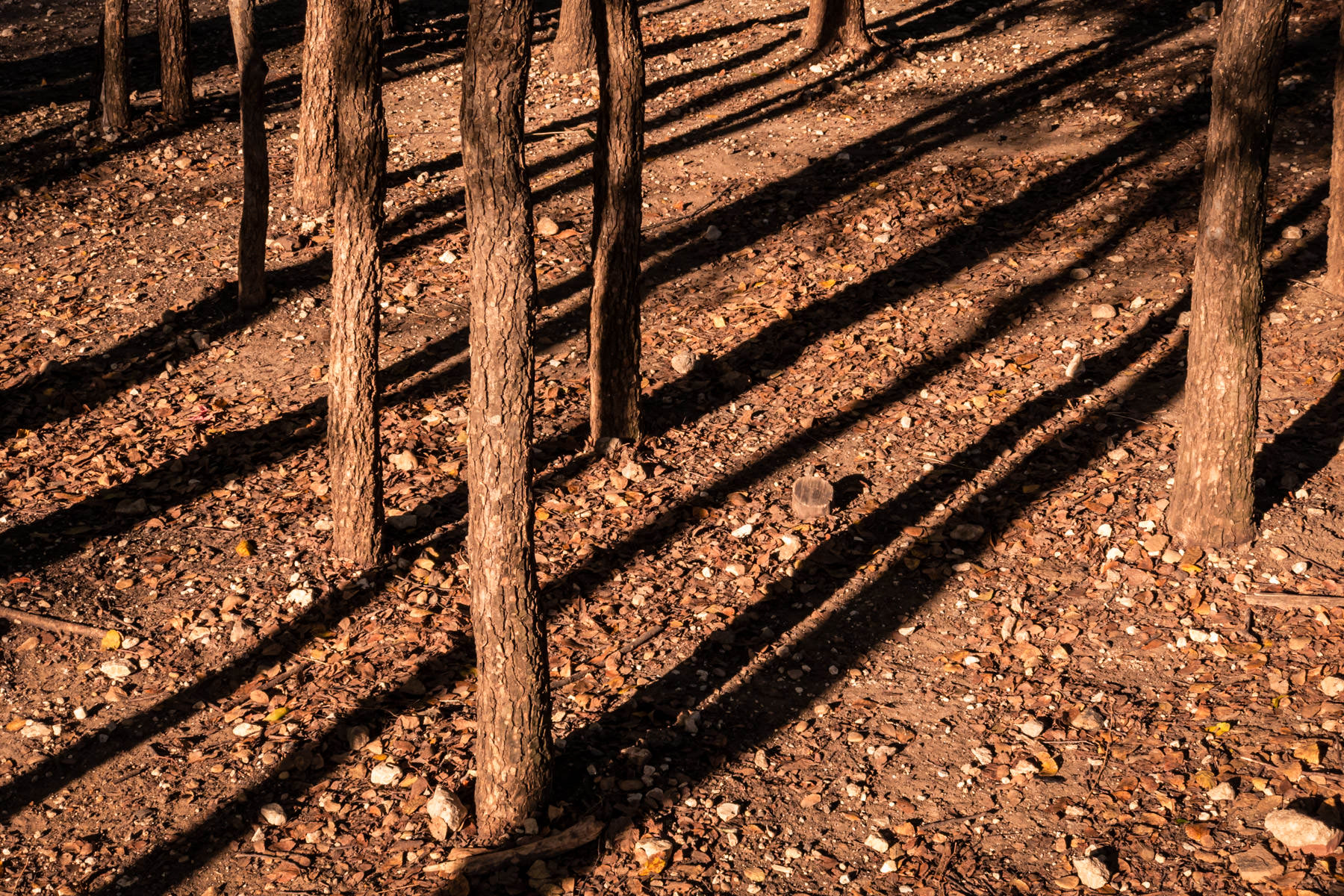 Trees cast shadows on a sunny autumn day in a small wooded area at a park in Dallas, Texas.