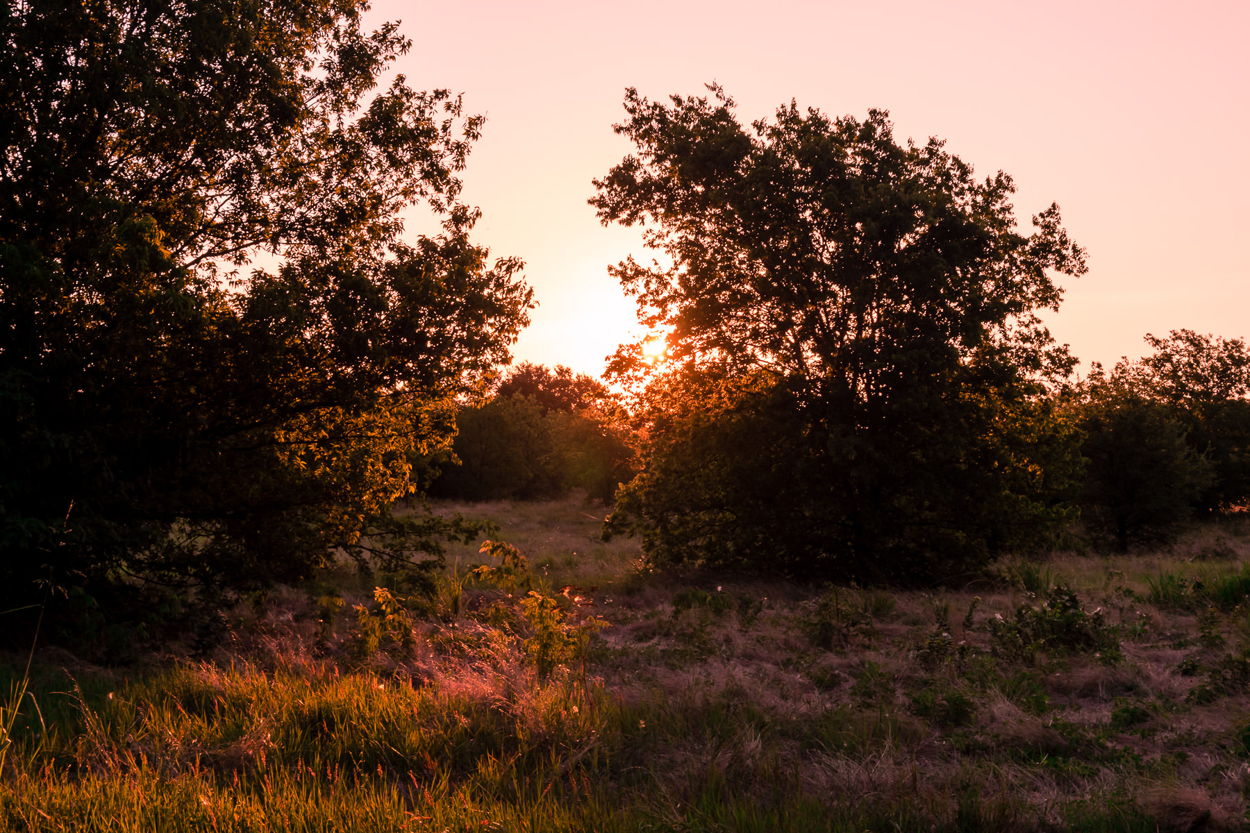 The sun rises over North Texas at the Arbor Hills Nature Preserve, Plano.