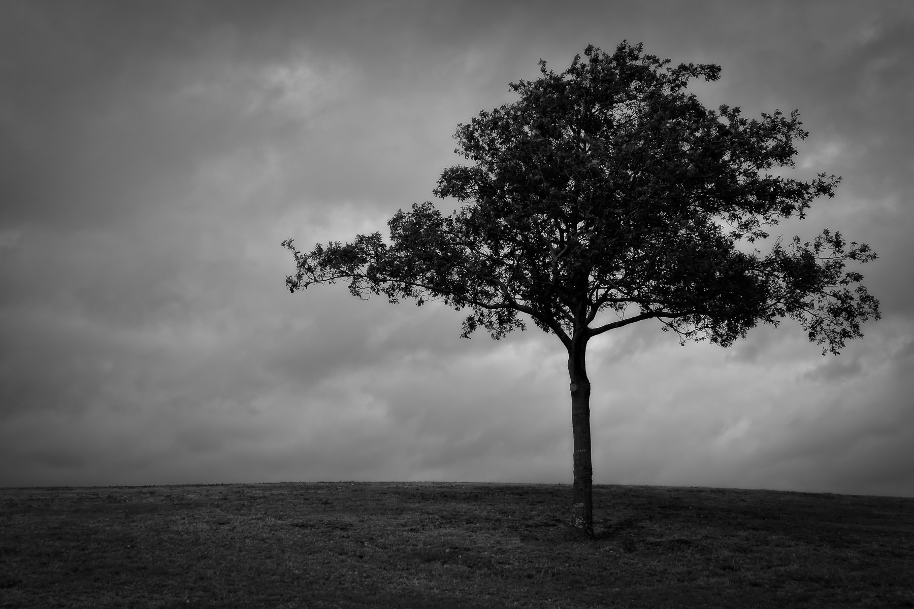 A lone tree grows atop a hill at Richardson, Texas' Breckinridge Park.