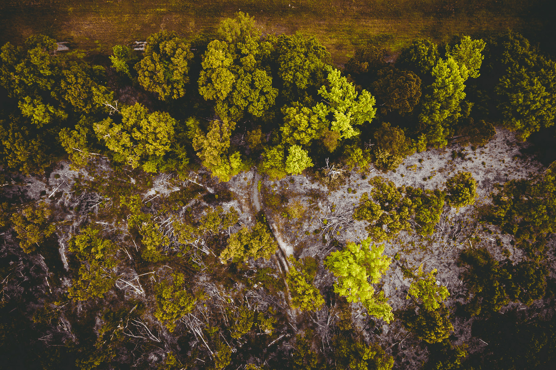 An birds-eye view of the edge of a forest near Lake Tyler in East Texas.