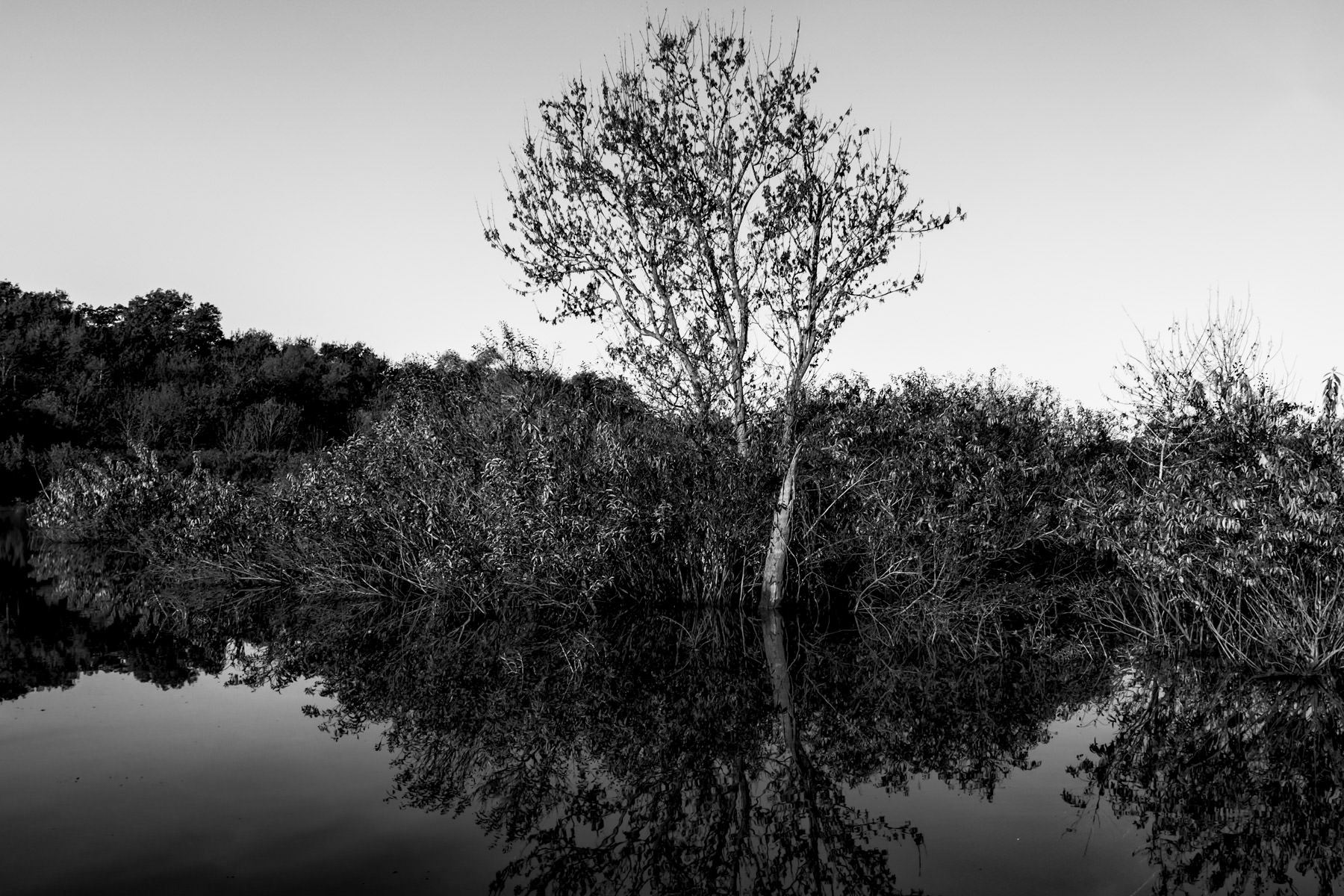 Trees are reflected on the smooth waters of a branch of Lake Worth at the Fort Worth Nature Center & Refuge, Texas.