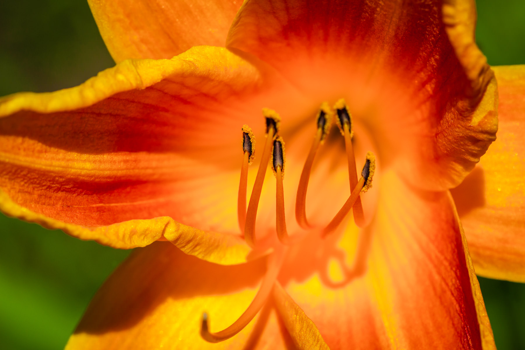 Stamens in an orange flower spotted in Fair Park, Dallas, Texas.