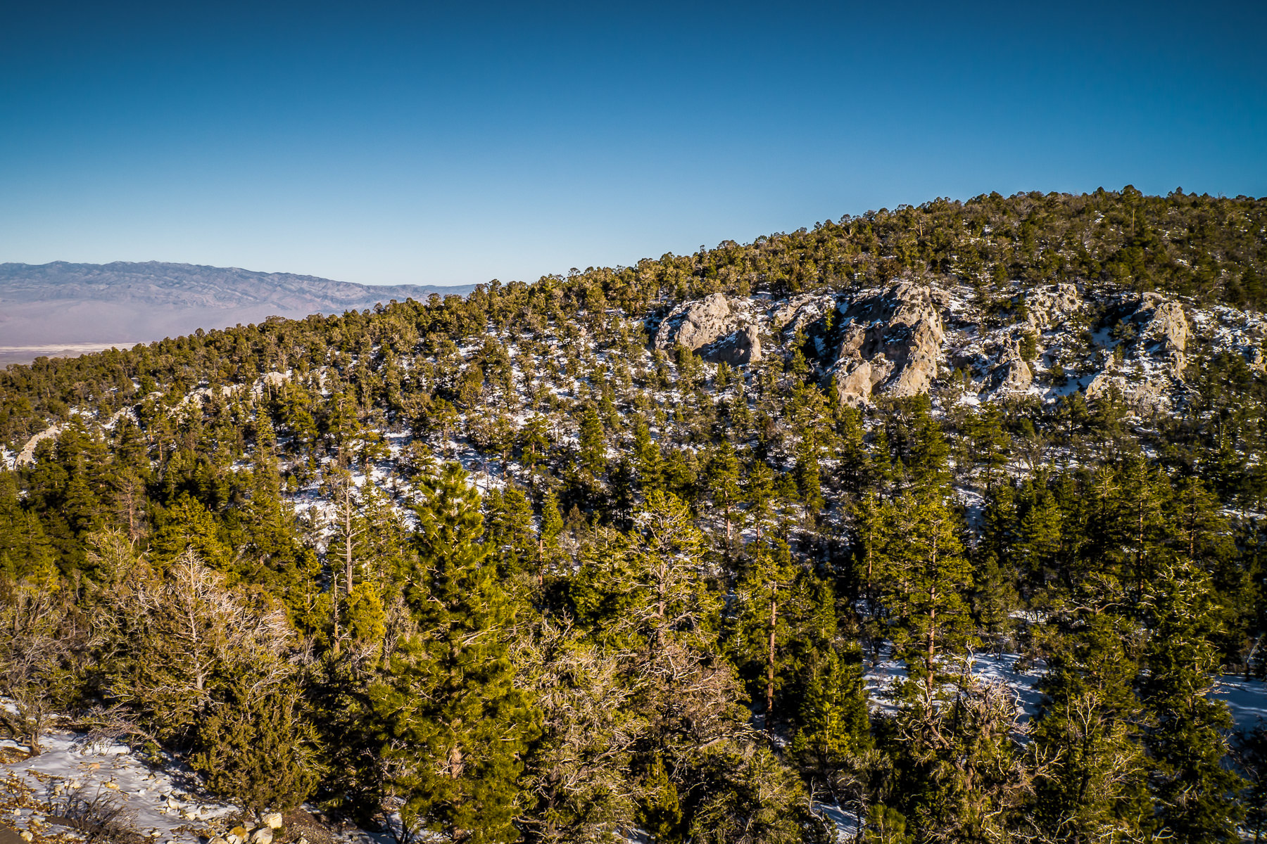 Trees grow in the snowy foothills of Nevada's Mount Charleston.