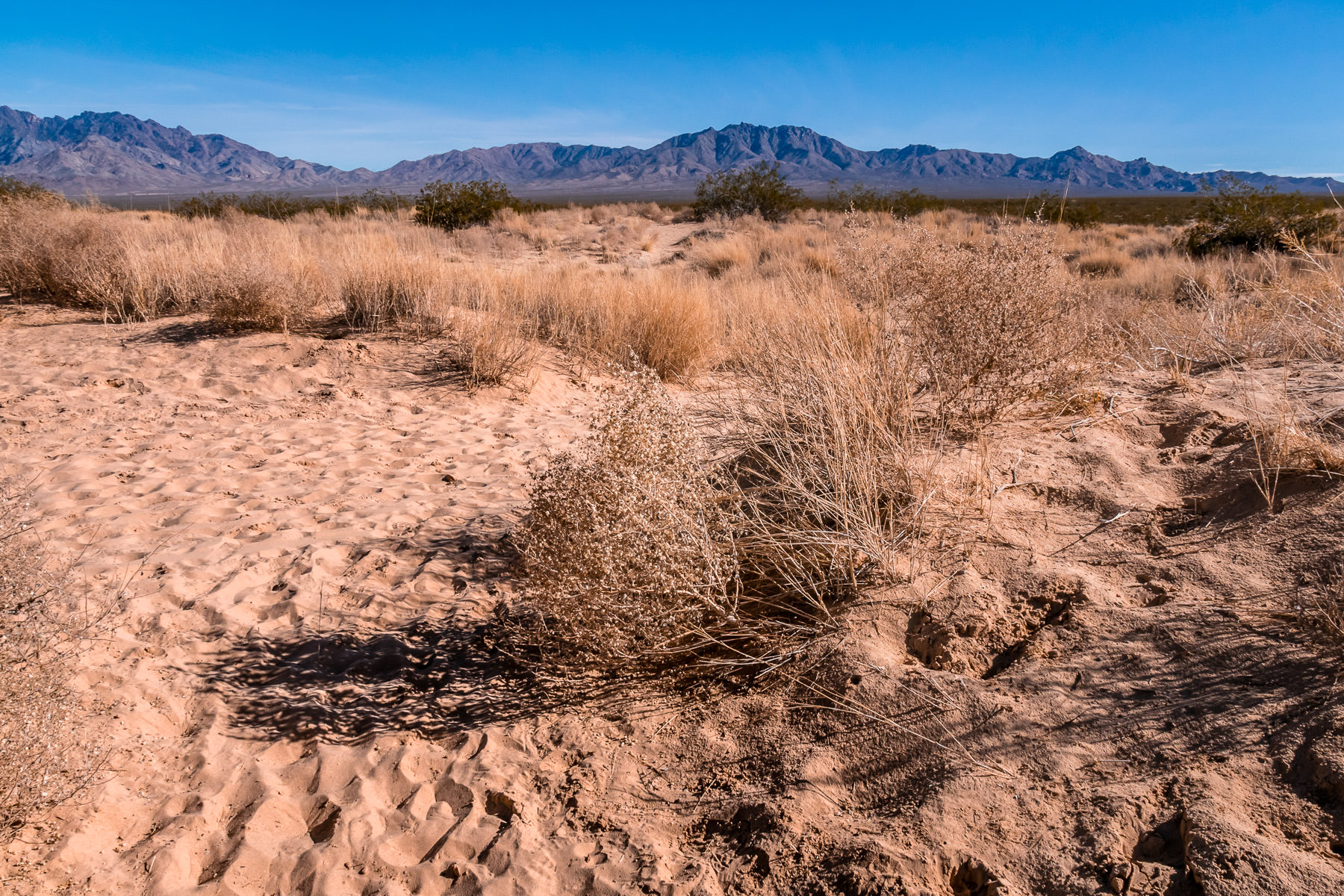 Desert scrub brush grows in the sand near Kelso Dunes at the Mojave National Preserve, California.