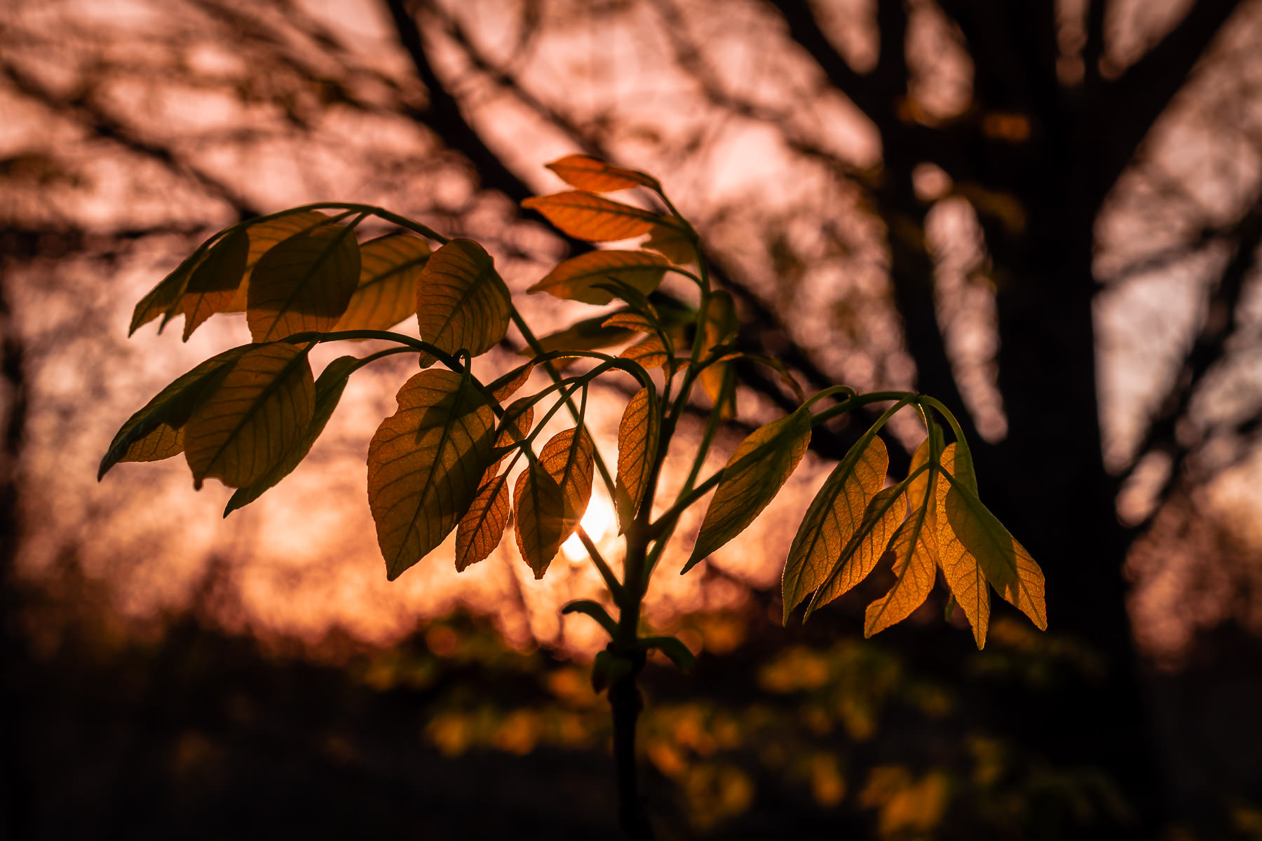 The first light of morning illuminates leaves at Fort Worth, Texas' Tandy Hills Natural Area.
