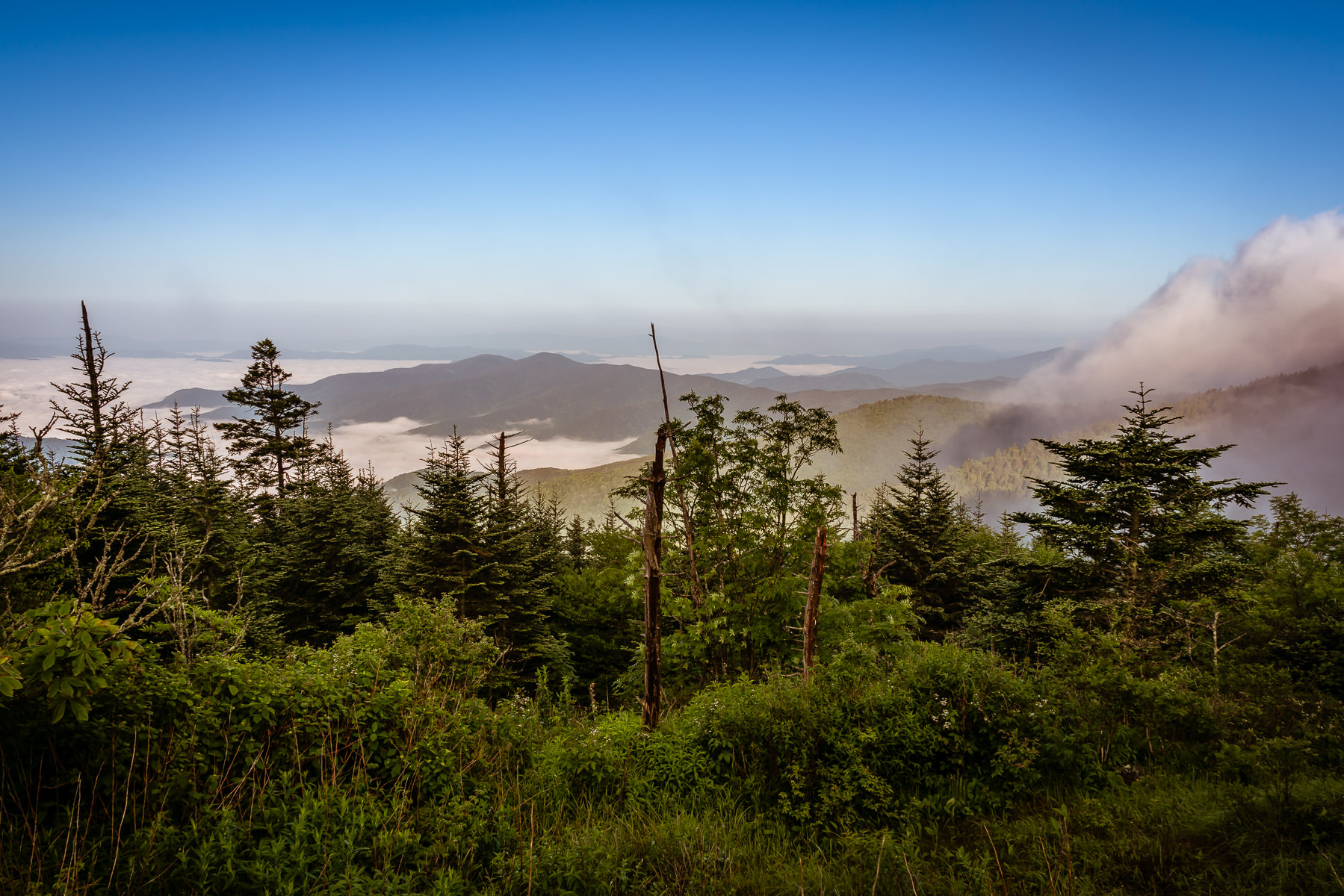 Trees grow near the summit of Clingmans Dome in the Great Smoky Mountains National Park.