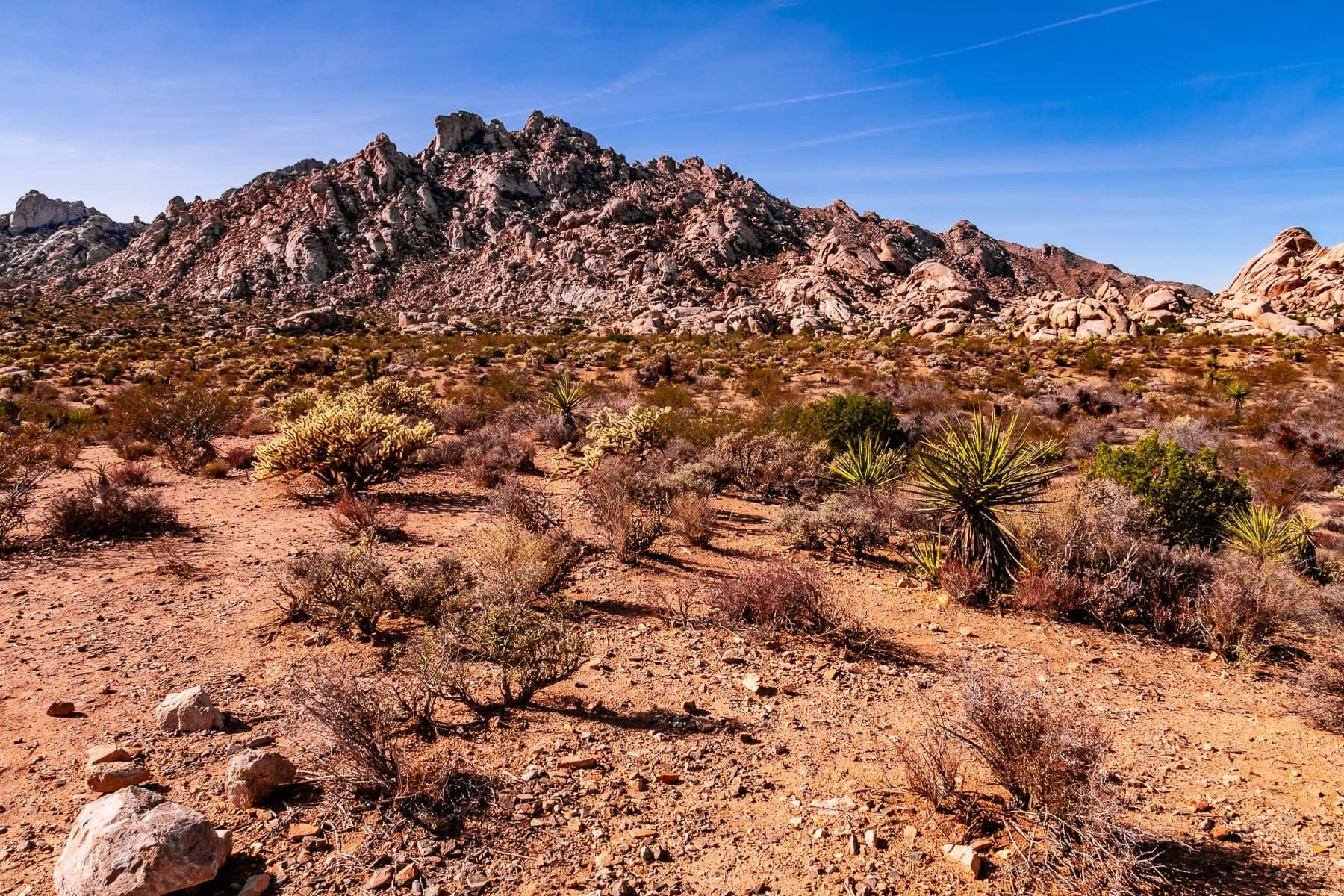The dry desert landscape of California's Mojave National Preserve.