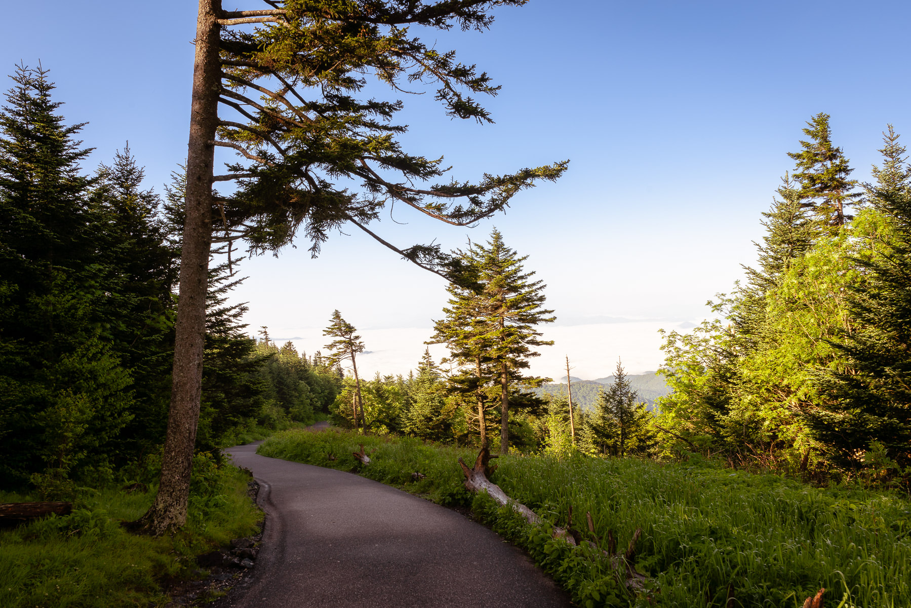 A path winds through the forest from the peak of the Great Smoky Mountains National Park's Clingmans Dome.