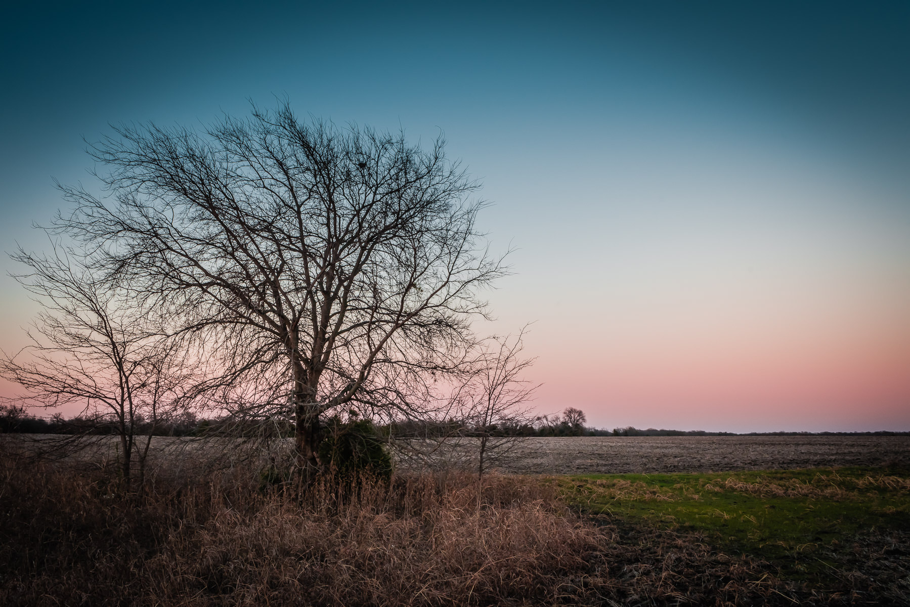A tree watches another day end in a field near McKinney, Texas.