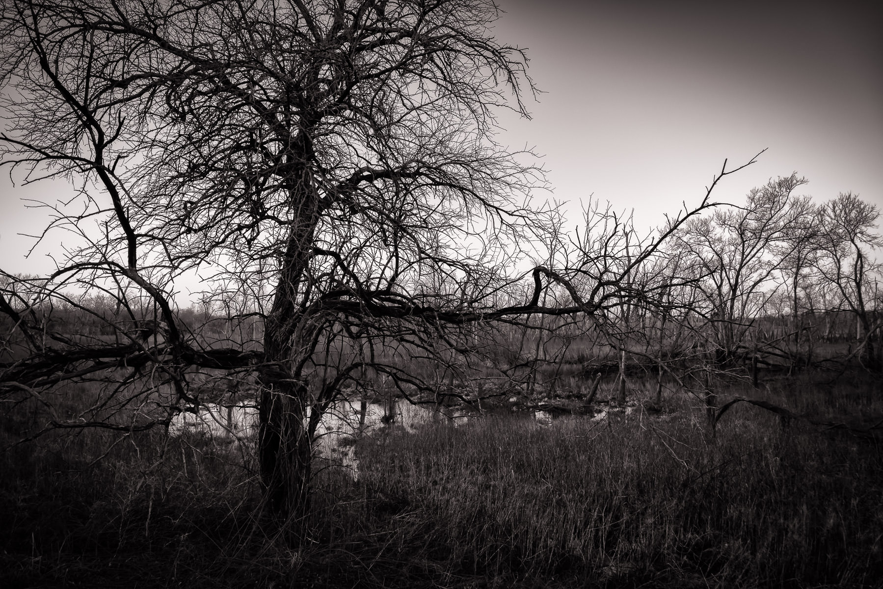 A tree spotted at Texas' Hagerman National Wildlife Refuge.