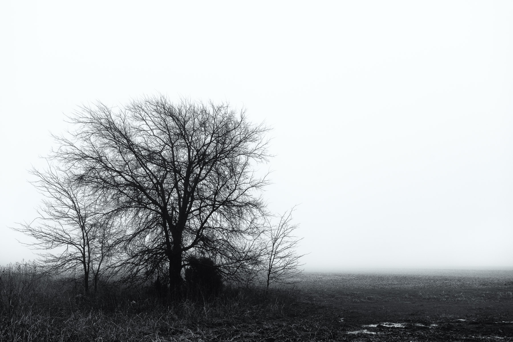 A tree grows in a foggy landscape on the outskirts of McKinney, Texas.