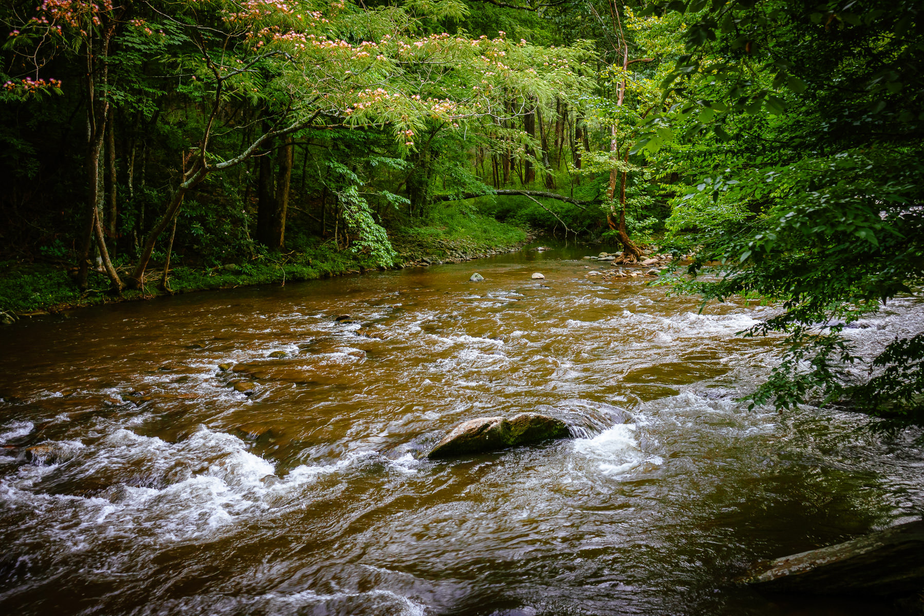 A stream flows through the forest of Tennessee's Great Smoky Mountains National Park.