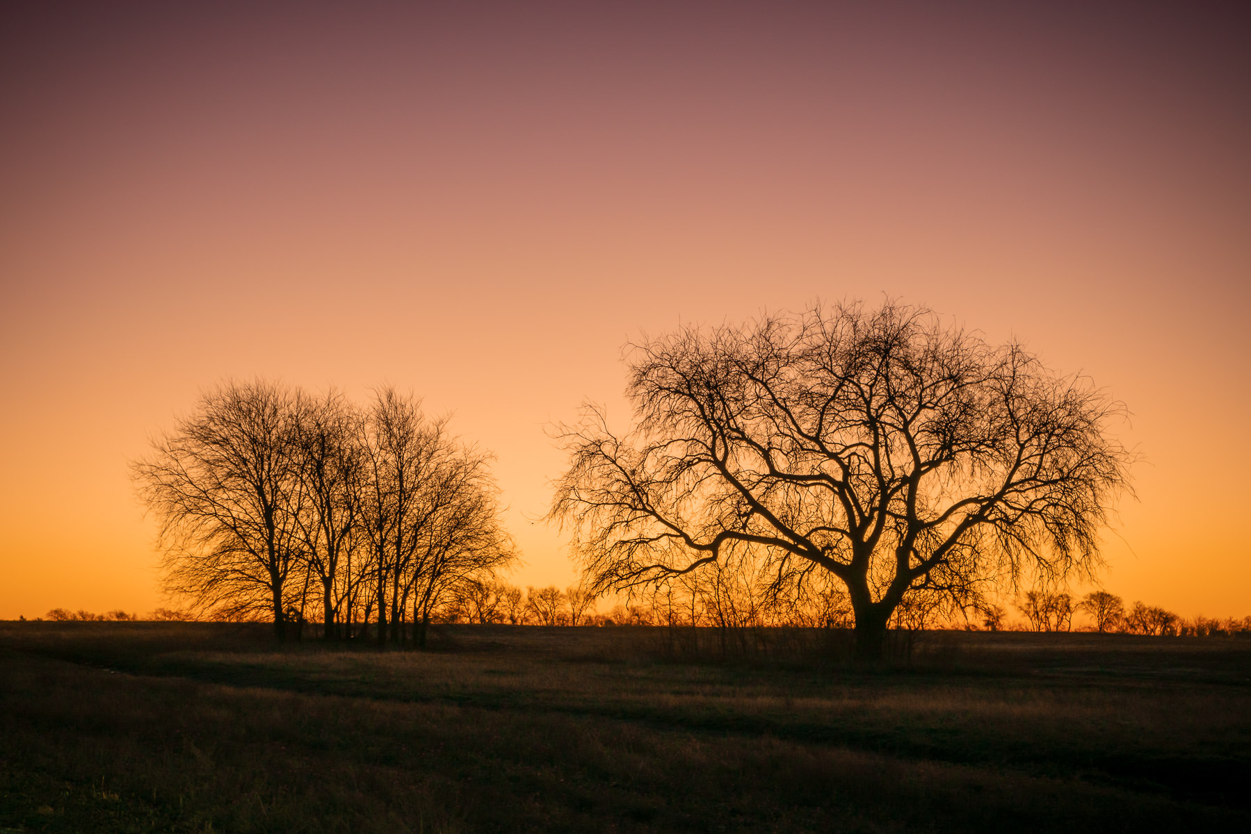 Trees near McKinney, Texas, are silhouetted by the rising sun.