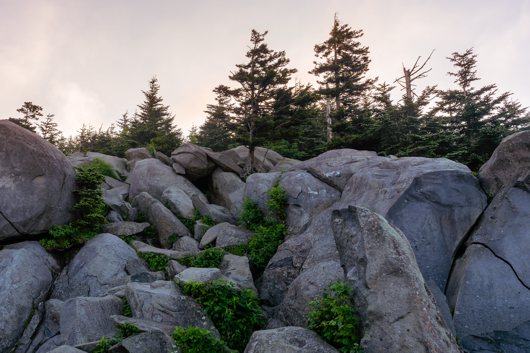 The sun begins to rise on rocks and trees near the summit of the Great Smoky Mountains National Park's Clingmans Dome.