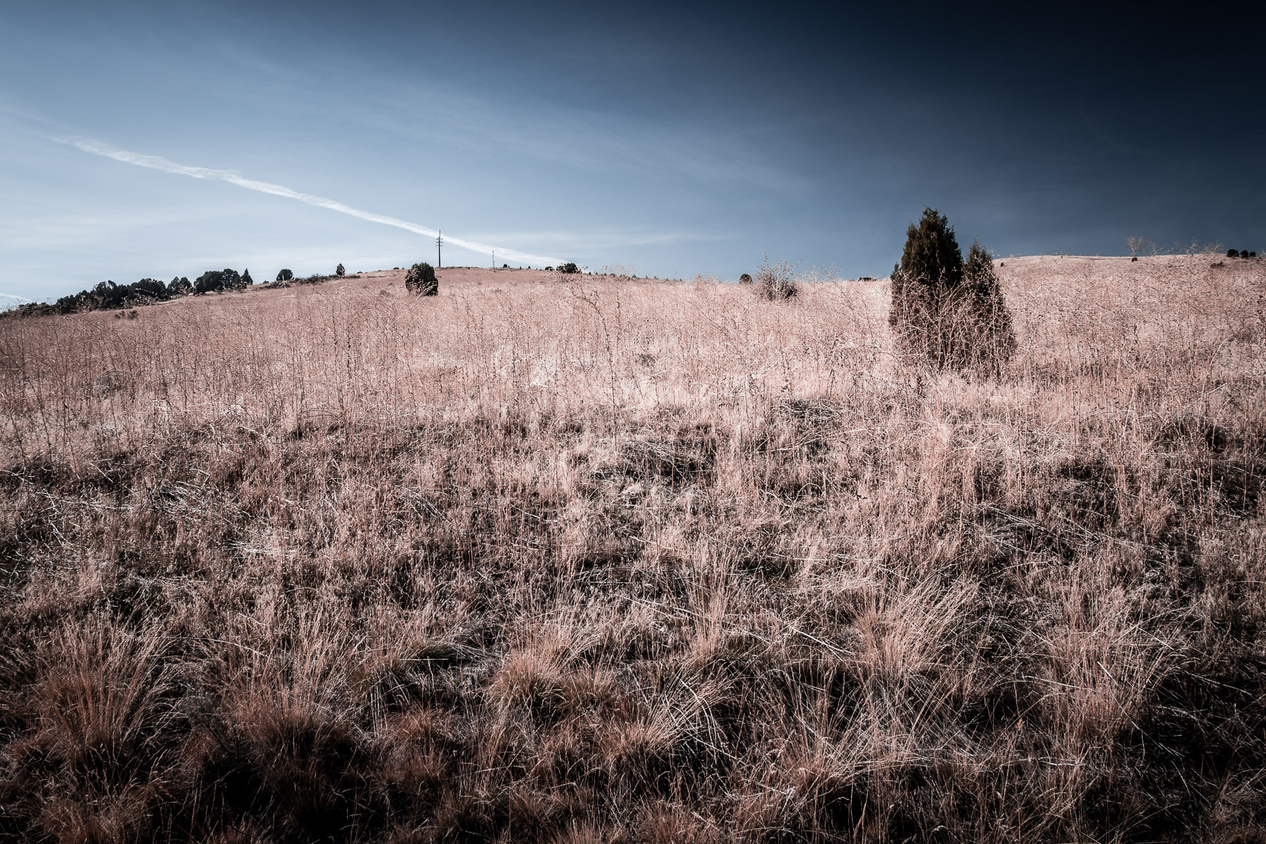 Tall grass grows on top of a hill on the outskirts of Pocatello, Idaho.