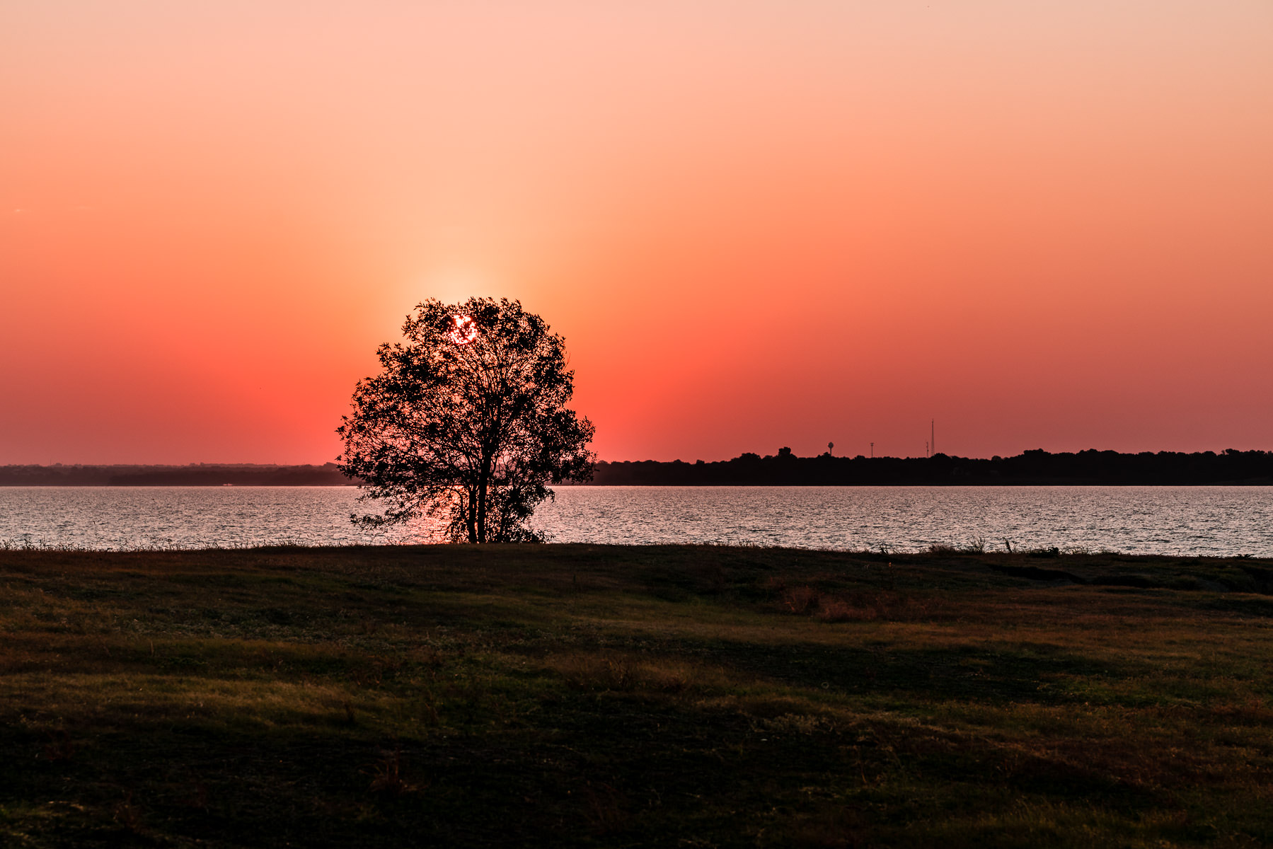 The sun rises on a tree along the shore of North Texas' Lake Lavon.