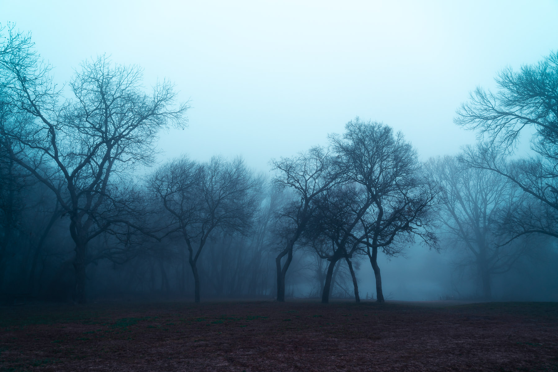 Morning fog envelops trees at McKinney, Texas' Erwin Park.