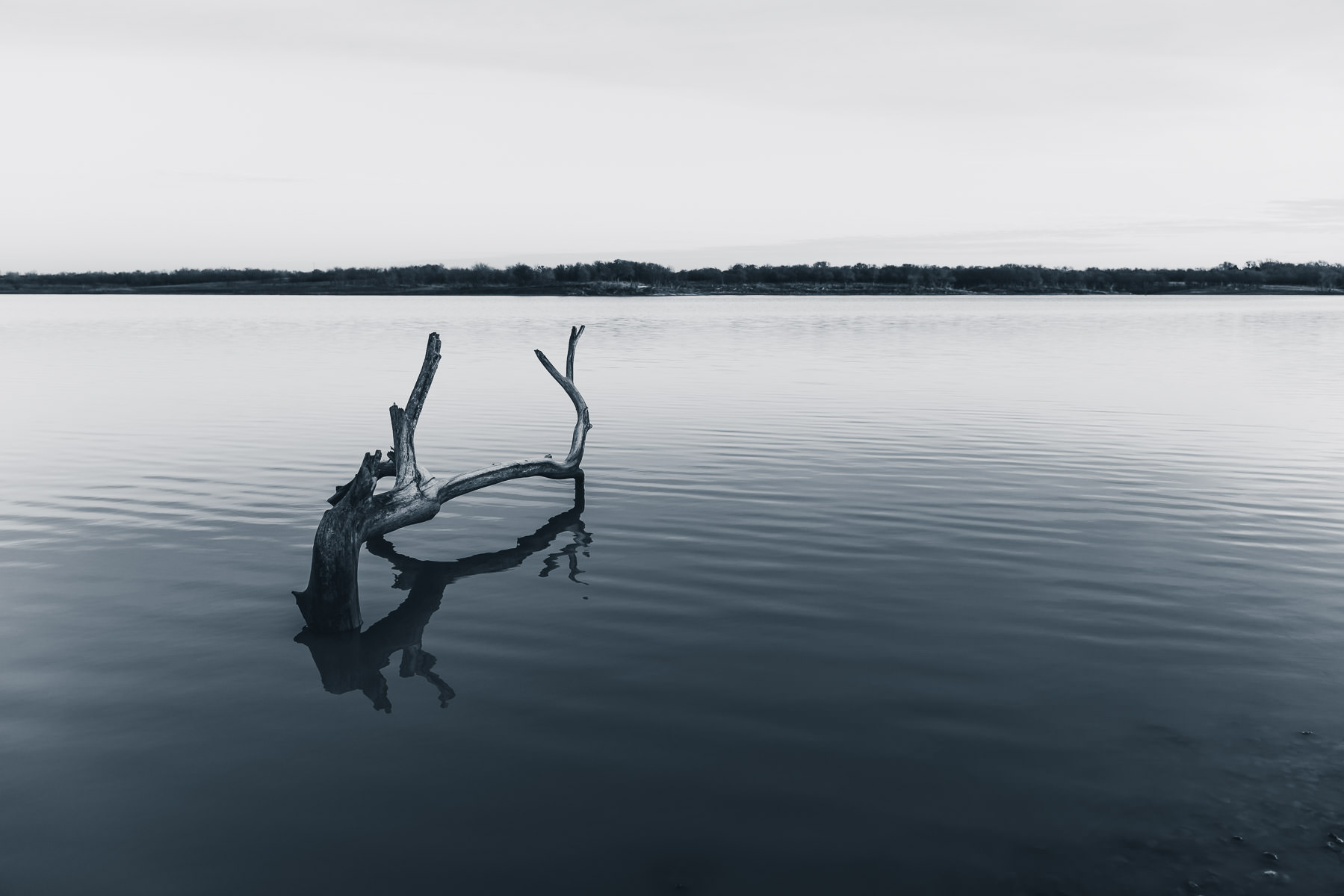 A fallen tree in the lake at North Texas' Hagerman National Wildlife Refuge.